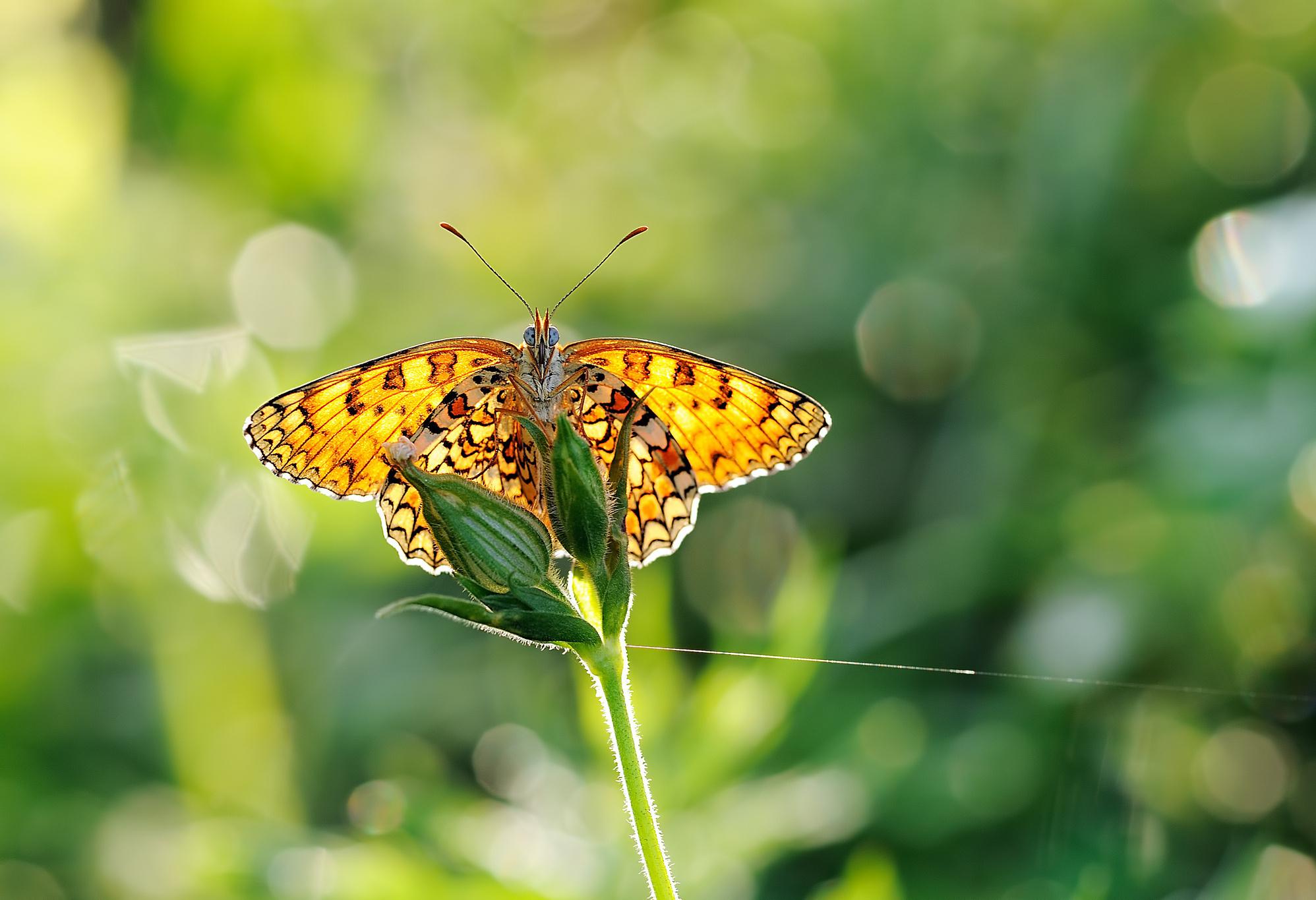 бабочка на зеленой траве  № 1396124 без смс