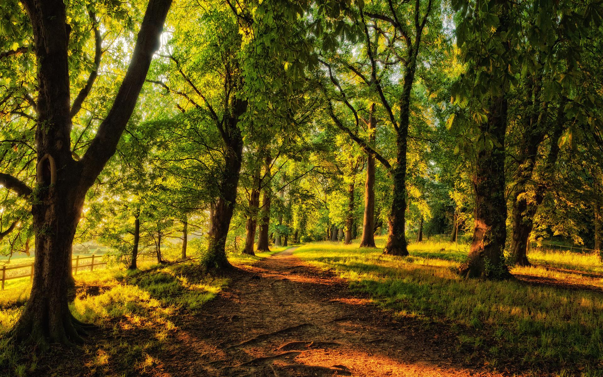 природа деревья лес тропа  № 1206374  скачать