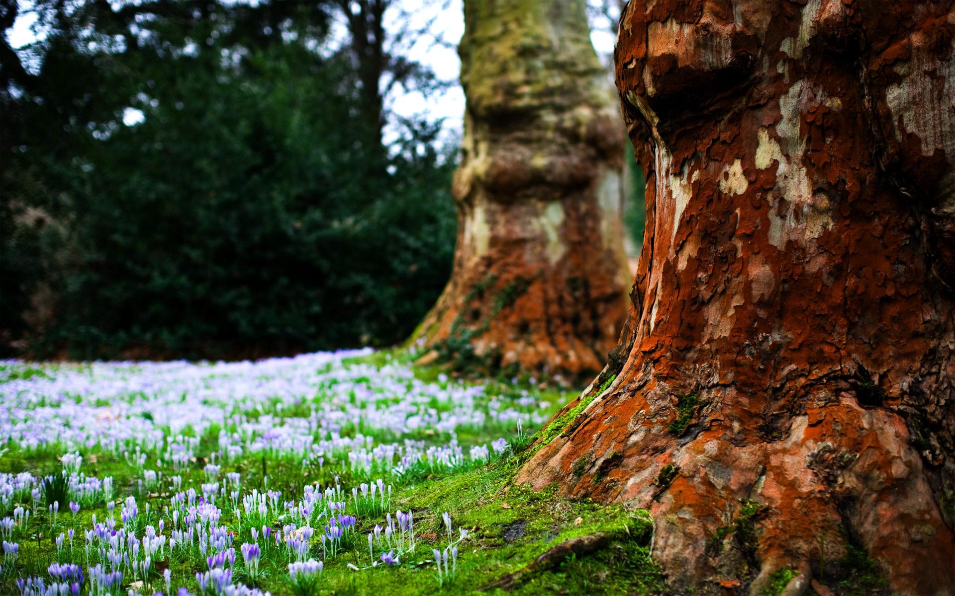 деревья на поляне  № 2050794  скачать