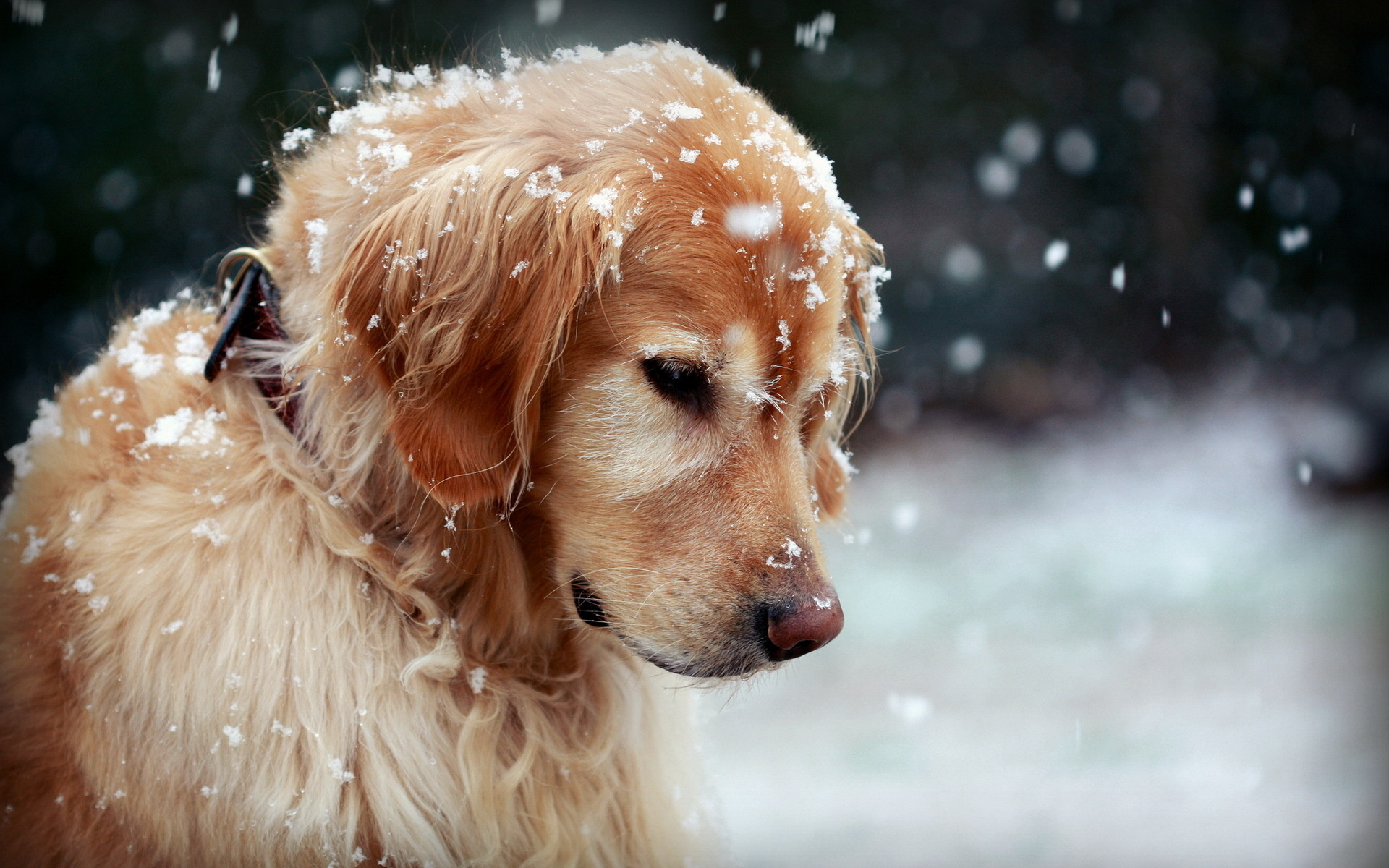 Dogs Wallpapers HD Pictures  One HD Wallpaper Pictures