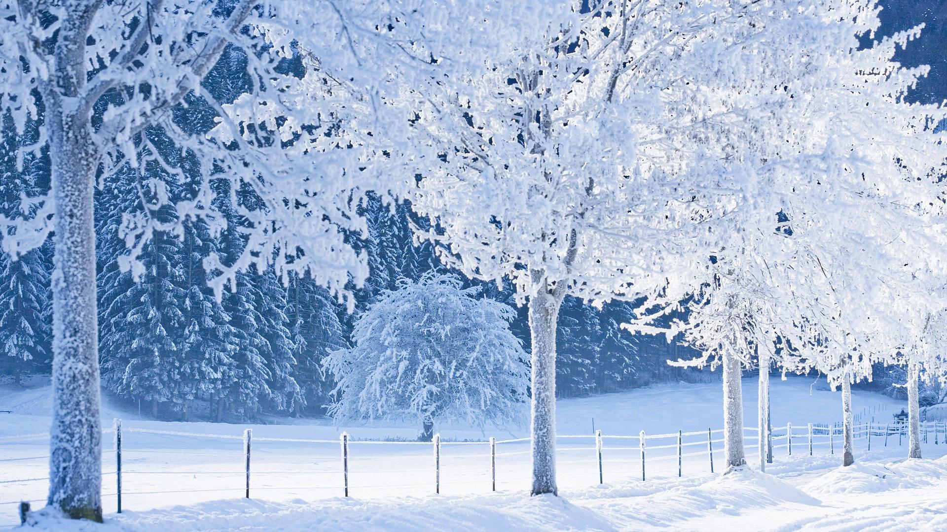 зима снег деревья без смс