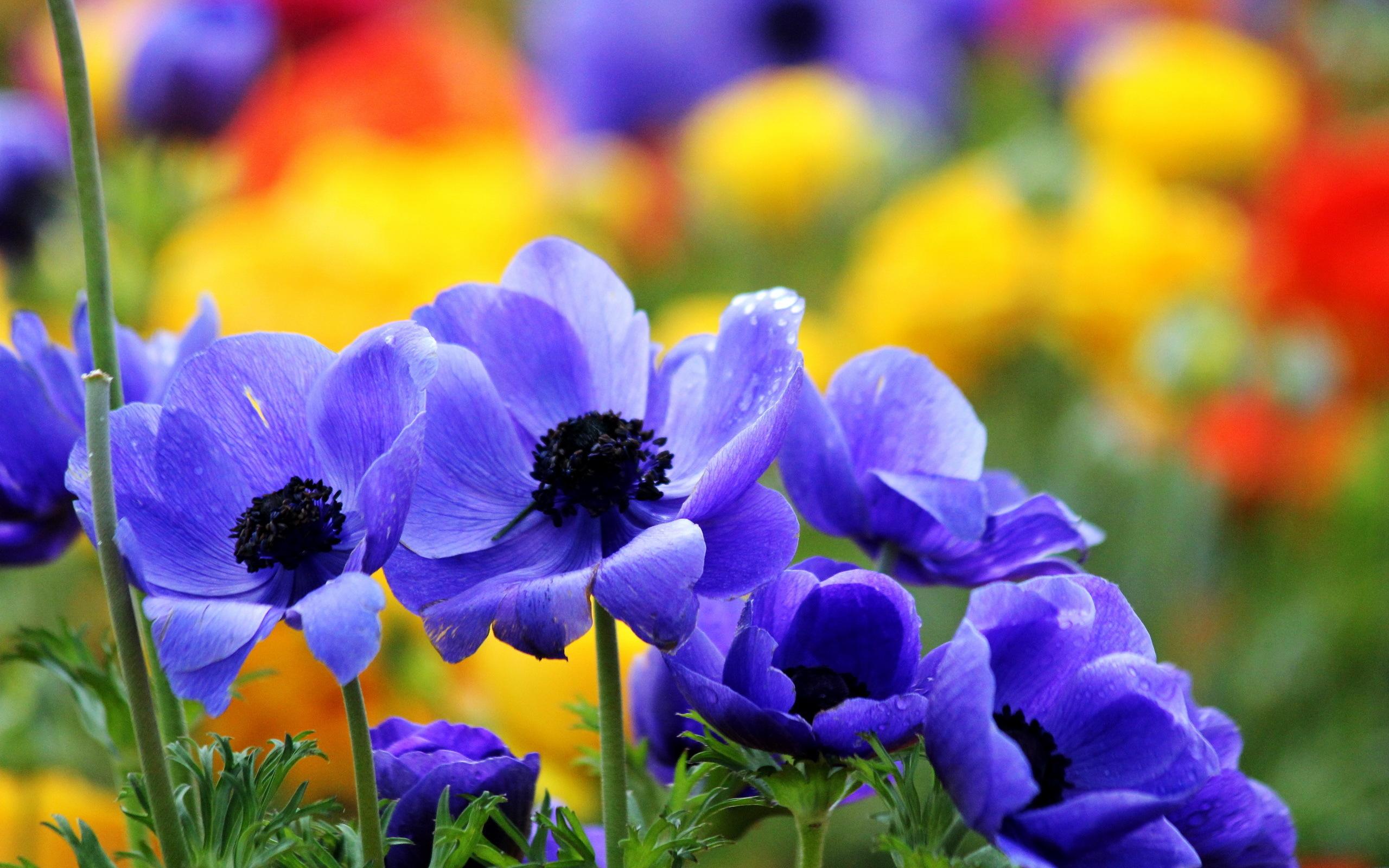 природа цветы синие красные загрузить