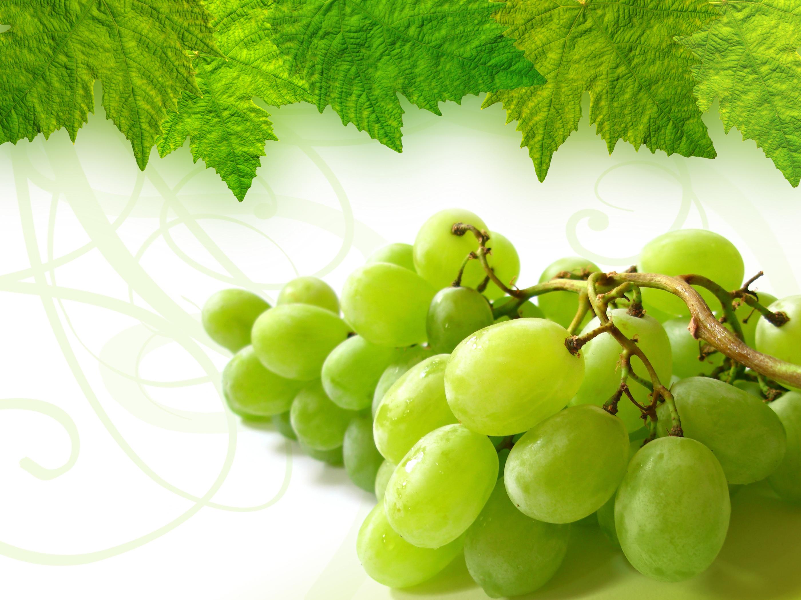 виноград гроздья бесплатно