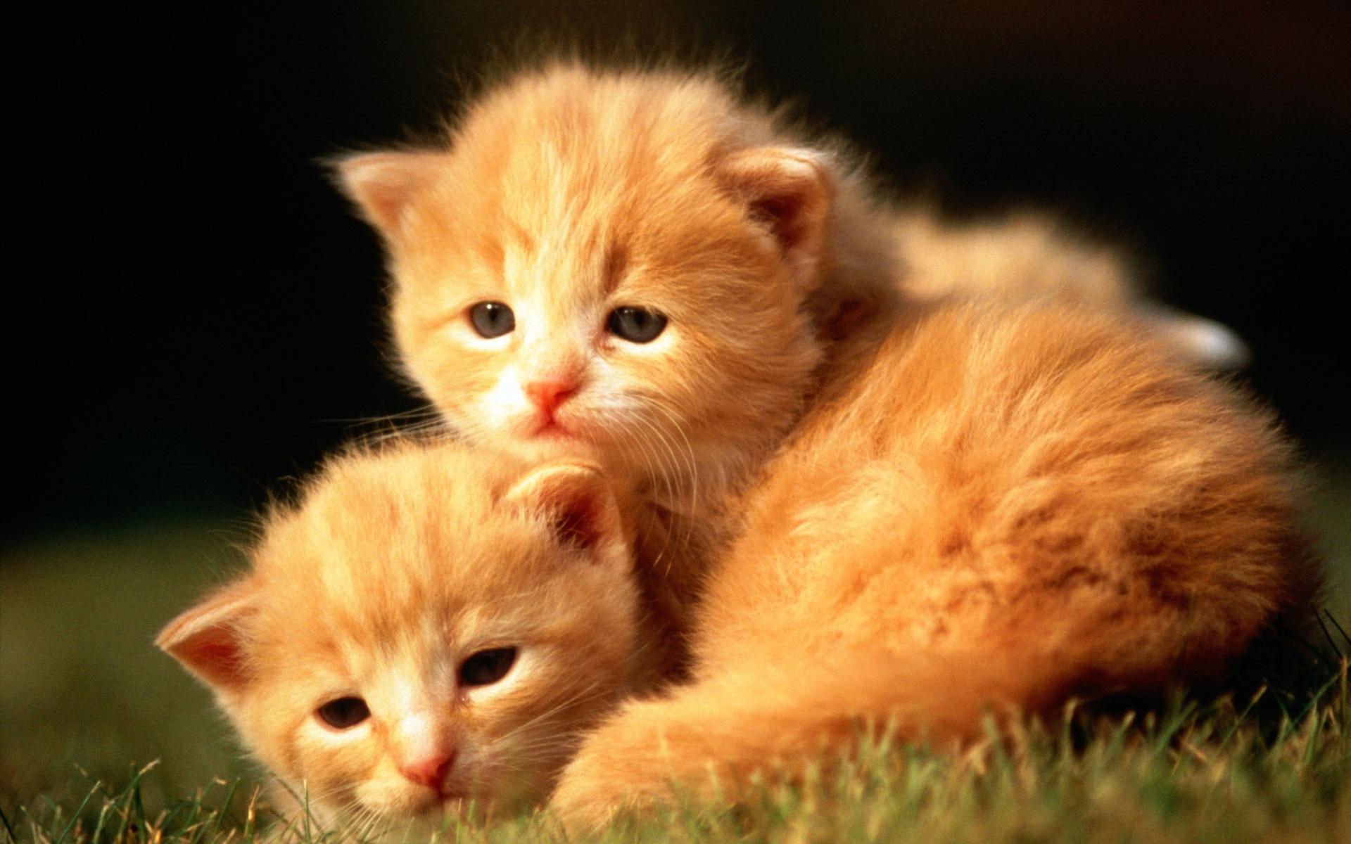 Кошки и котята картинки красивые, днем рождения подруге