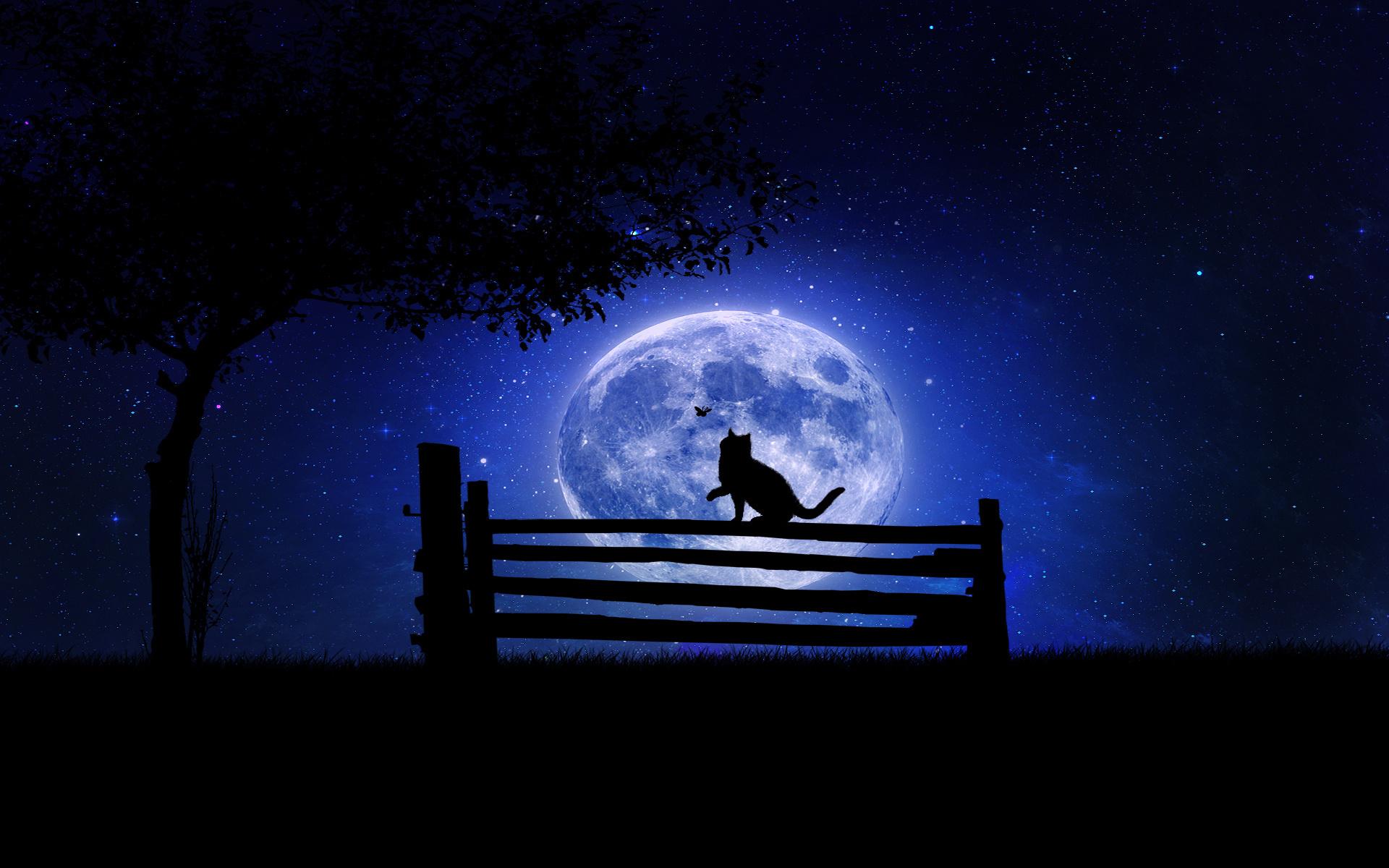 скамейка ночь скачать