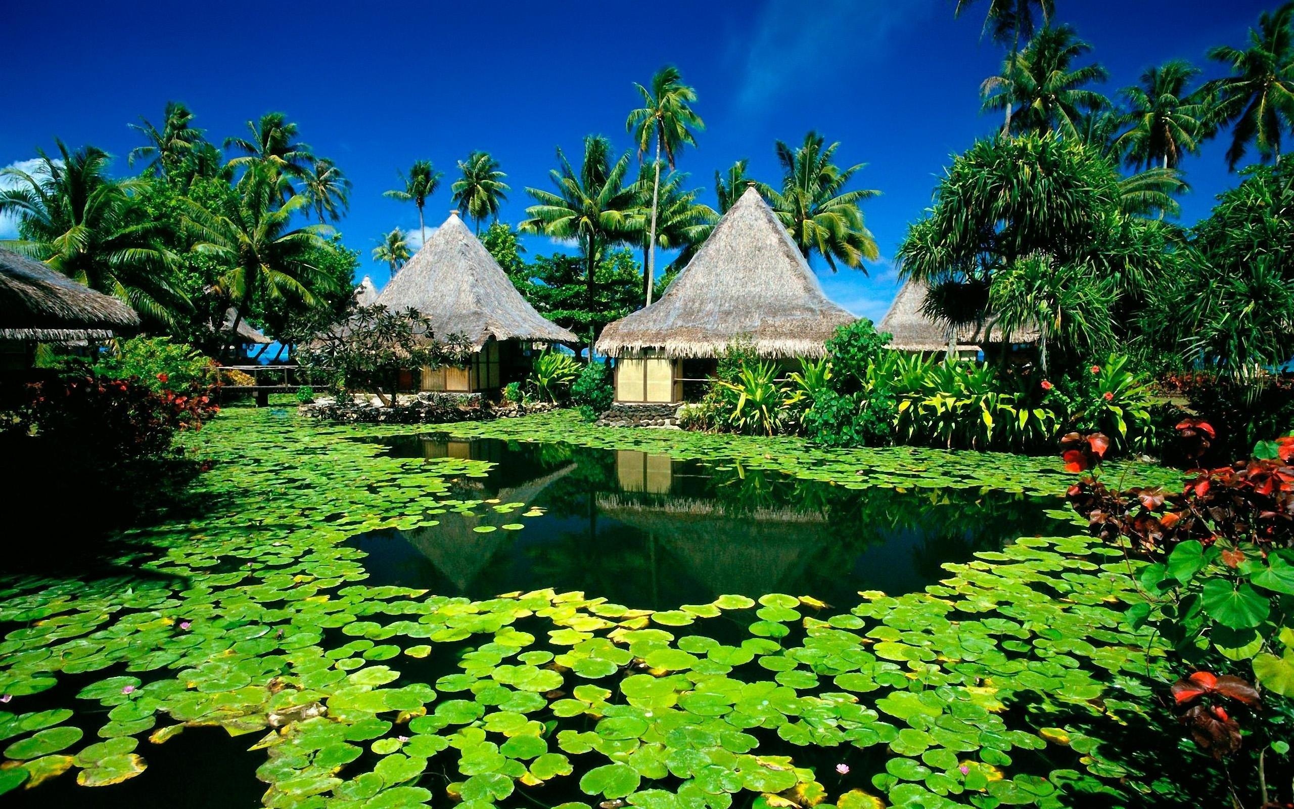 деревья, тропики, лето, гавайи бесплатно