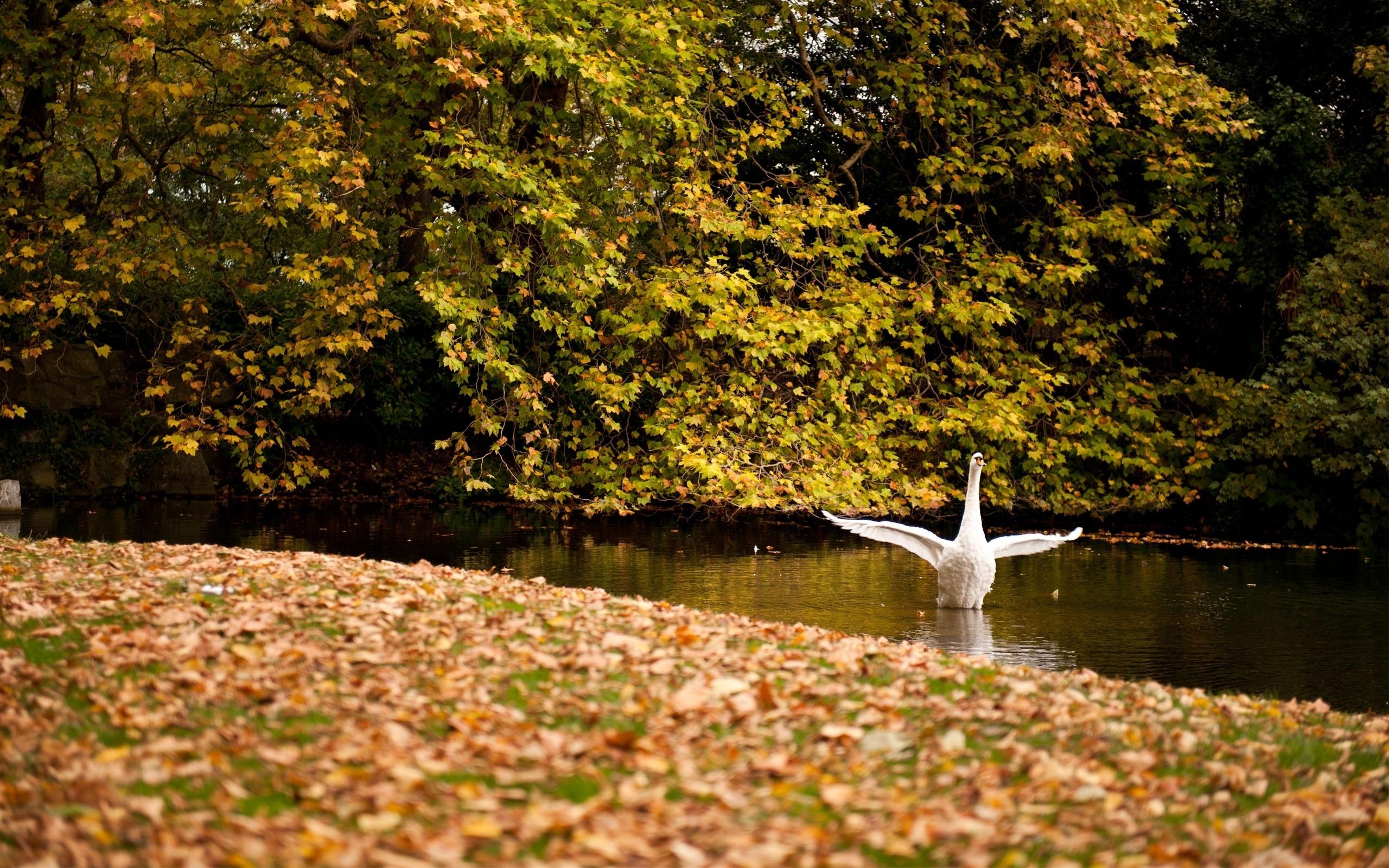 природа река деревья облака лебедь животные загрузить