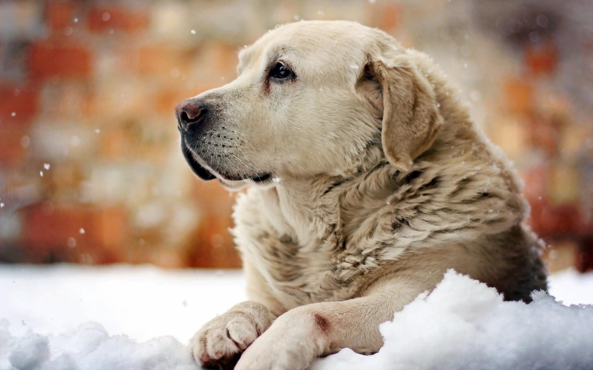 природа животные зима собака скачать
