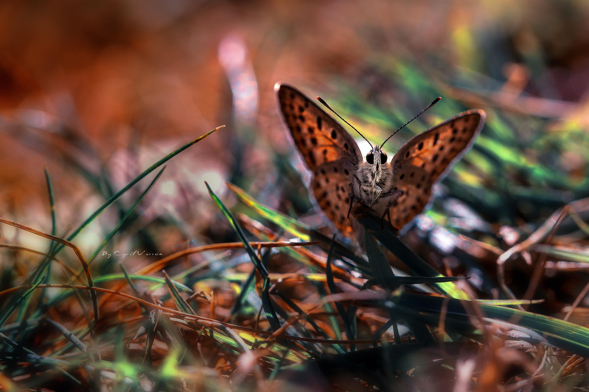 природа животные насекомое макро бабочки nature animals insect macro butterfly скачать