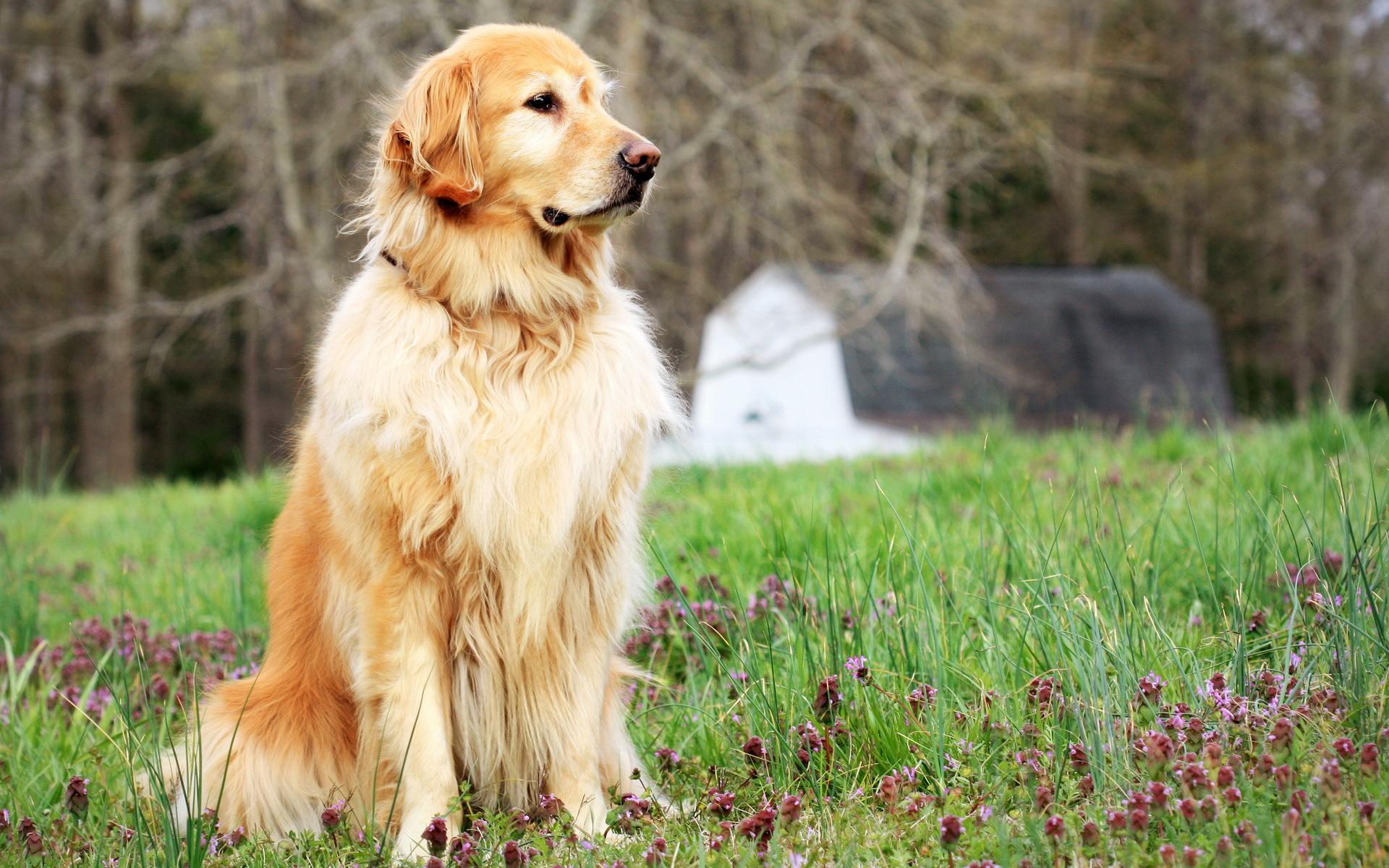 картинки собаки большого размера