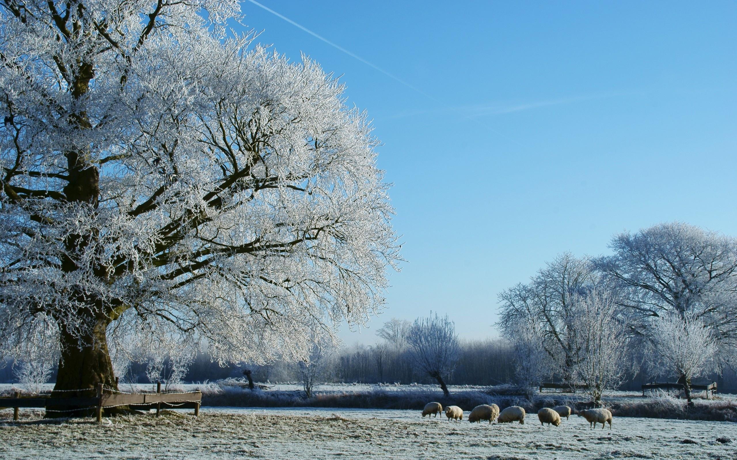 природа зима деревья без смс