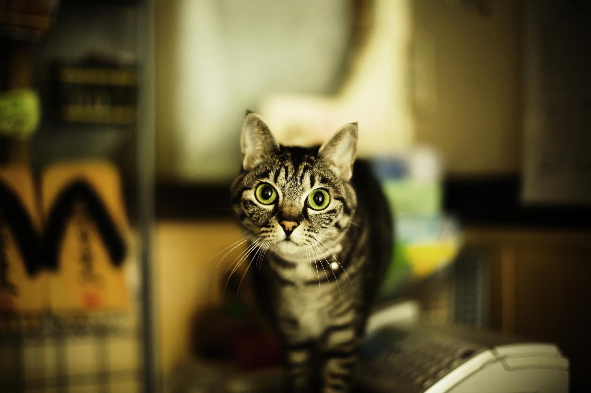 кошка домик усы загрузить