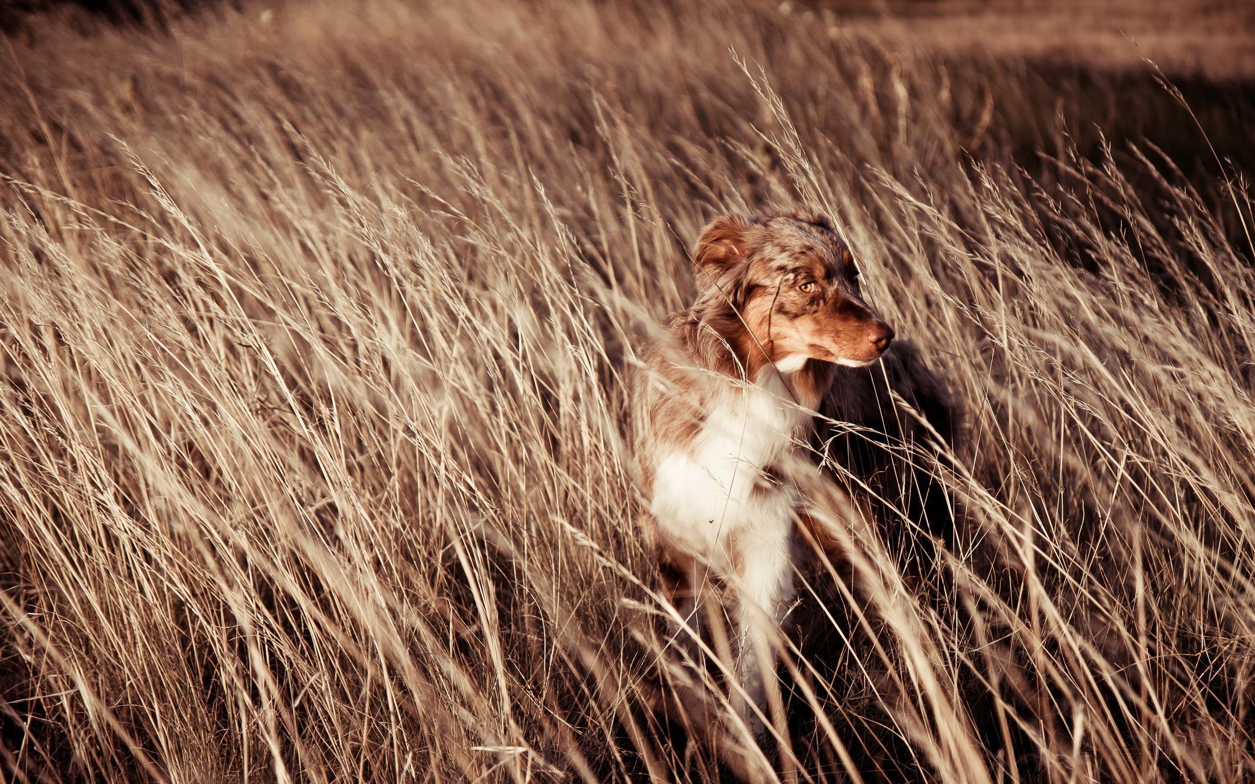 животные собака трава природа бесплатно