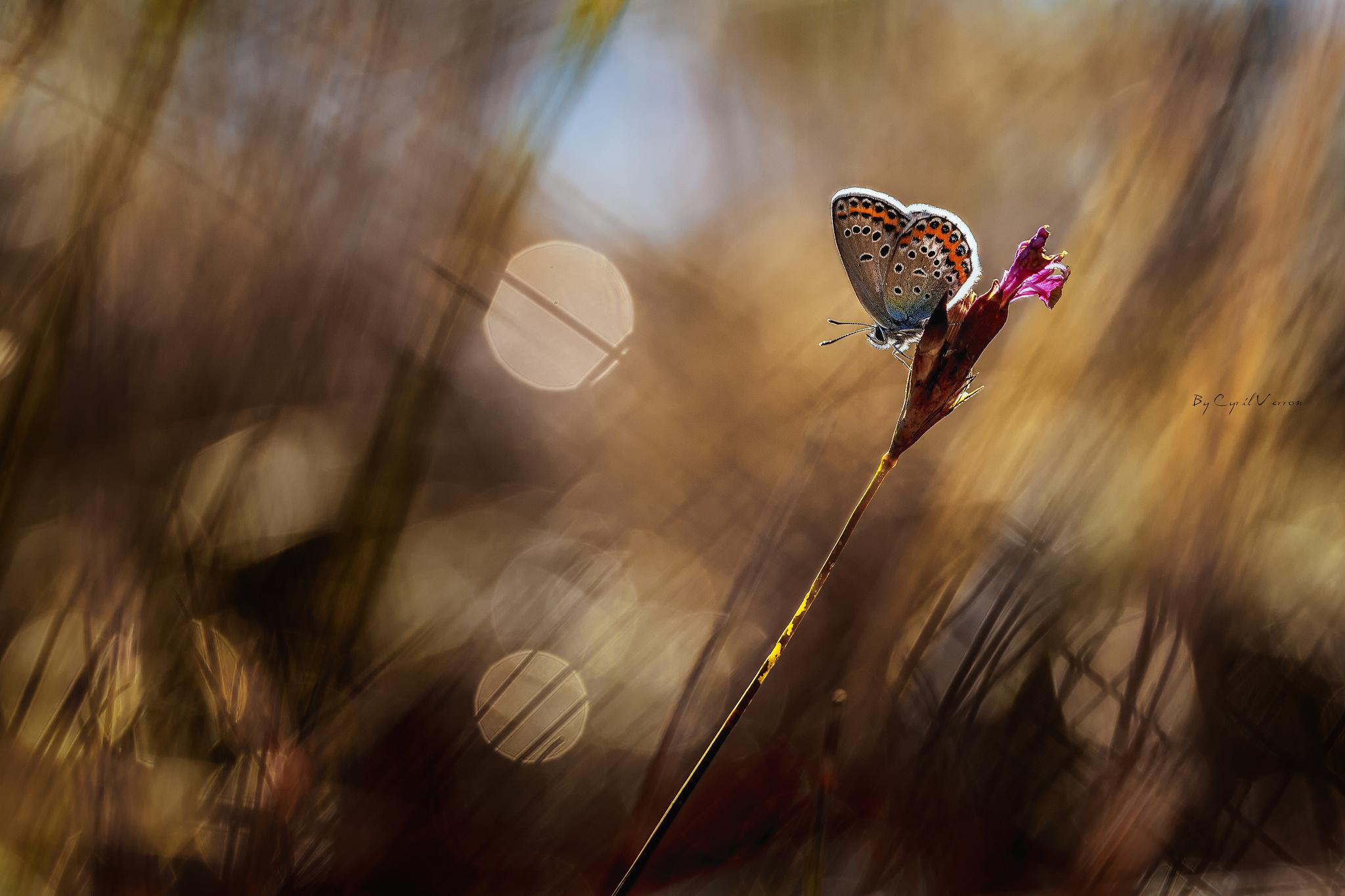 девушки банка природа животные бабочка трава загрузить