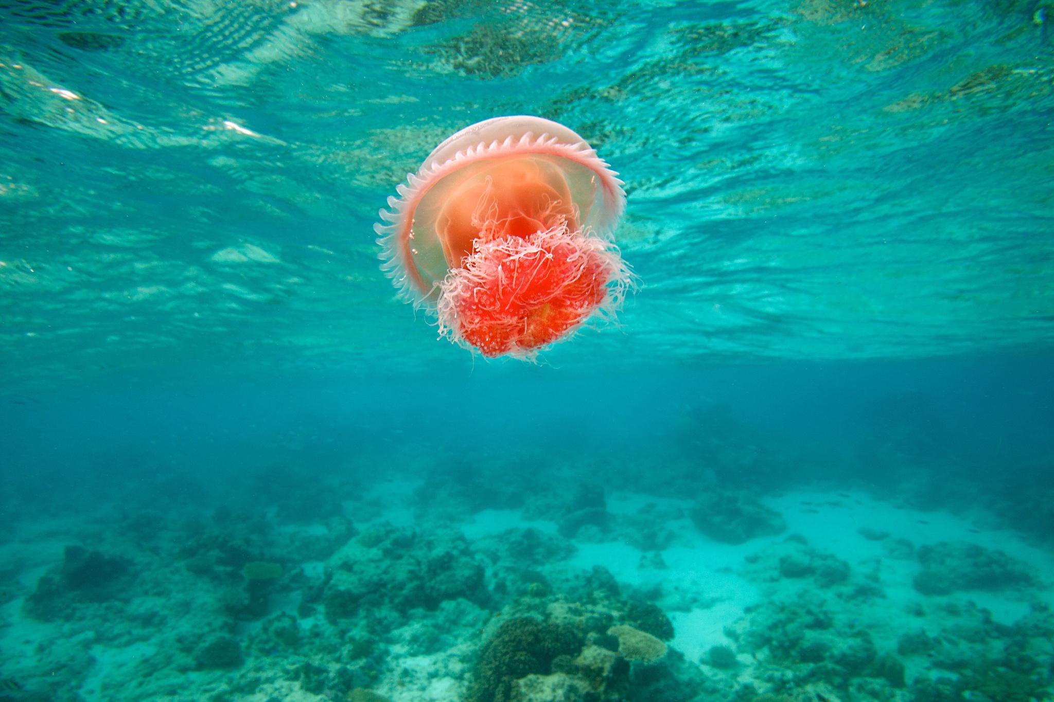 Медузы  фото  интересные факты