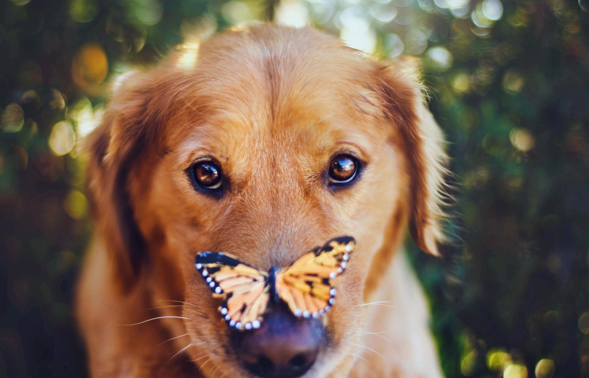 влюбленная собака без смс