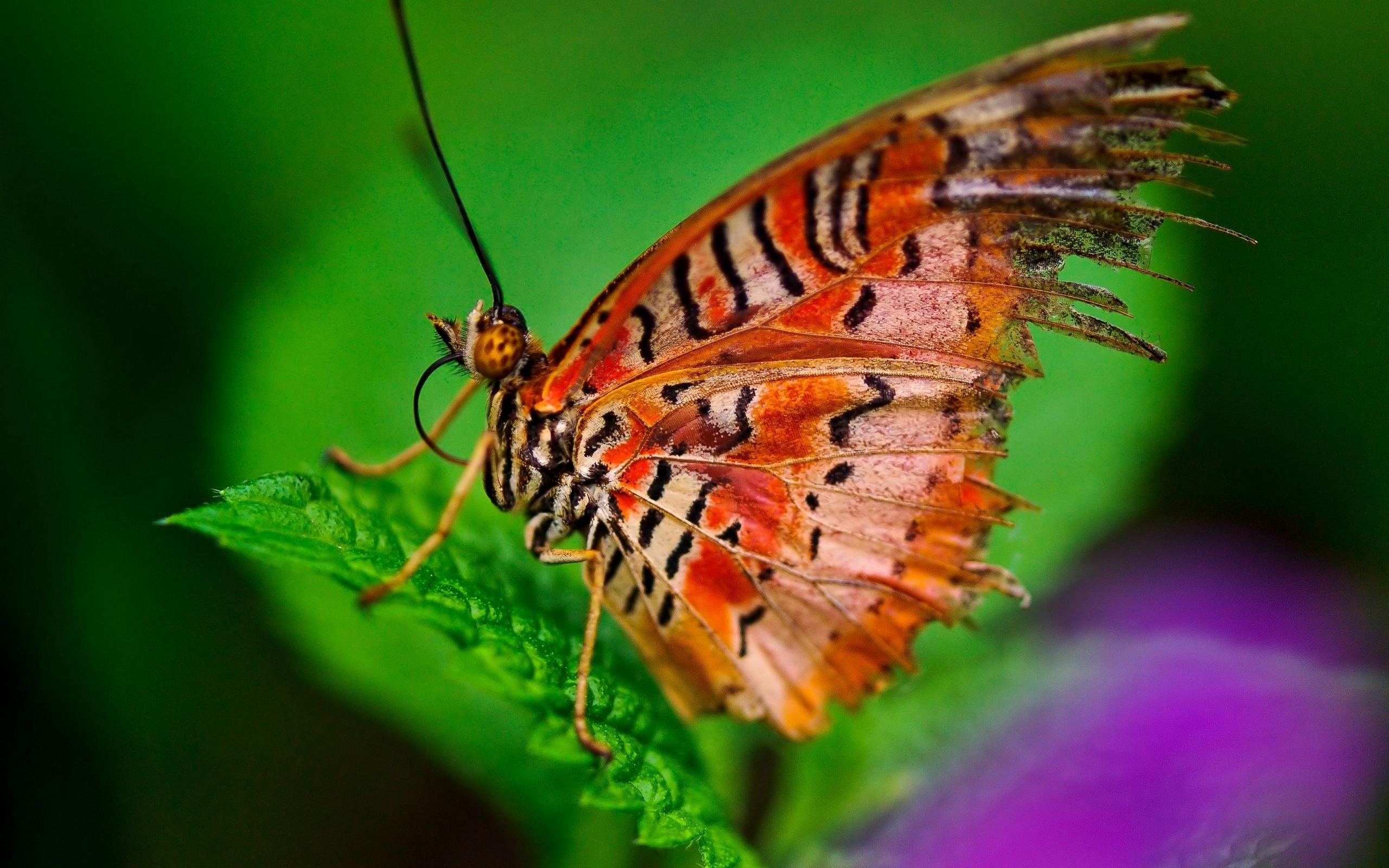 Фото - приветру - 2 - бабочки - фотографии пользователя люсси