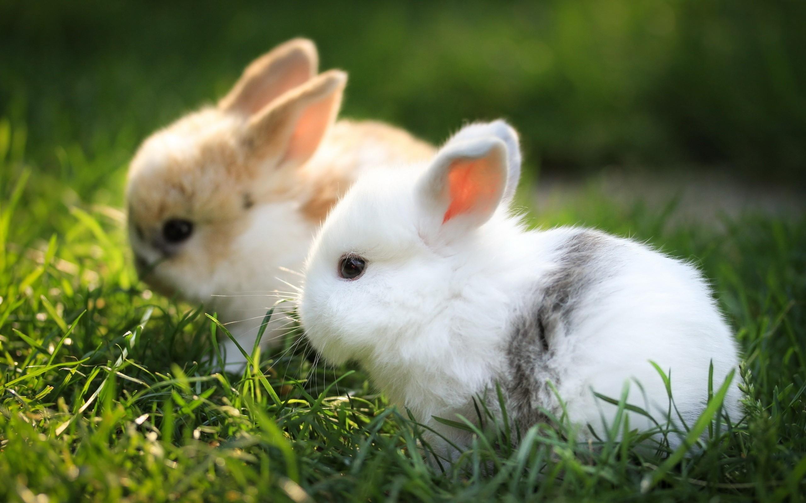 кролик девушка природа животное  № 1594083 загрузить