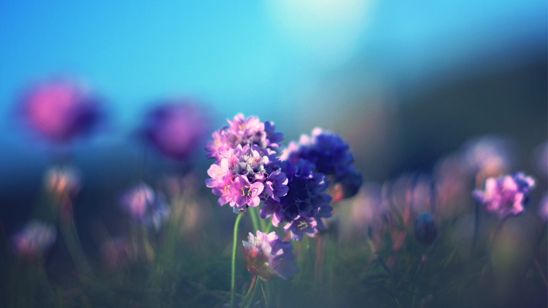 Синие цветы размытый фон загрузить