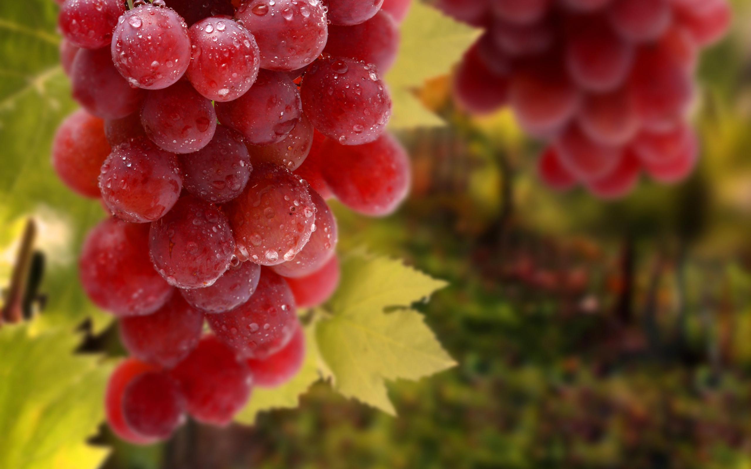 виноград гроздья без смс
