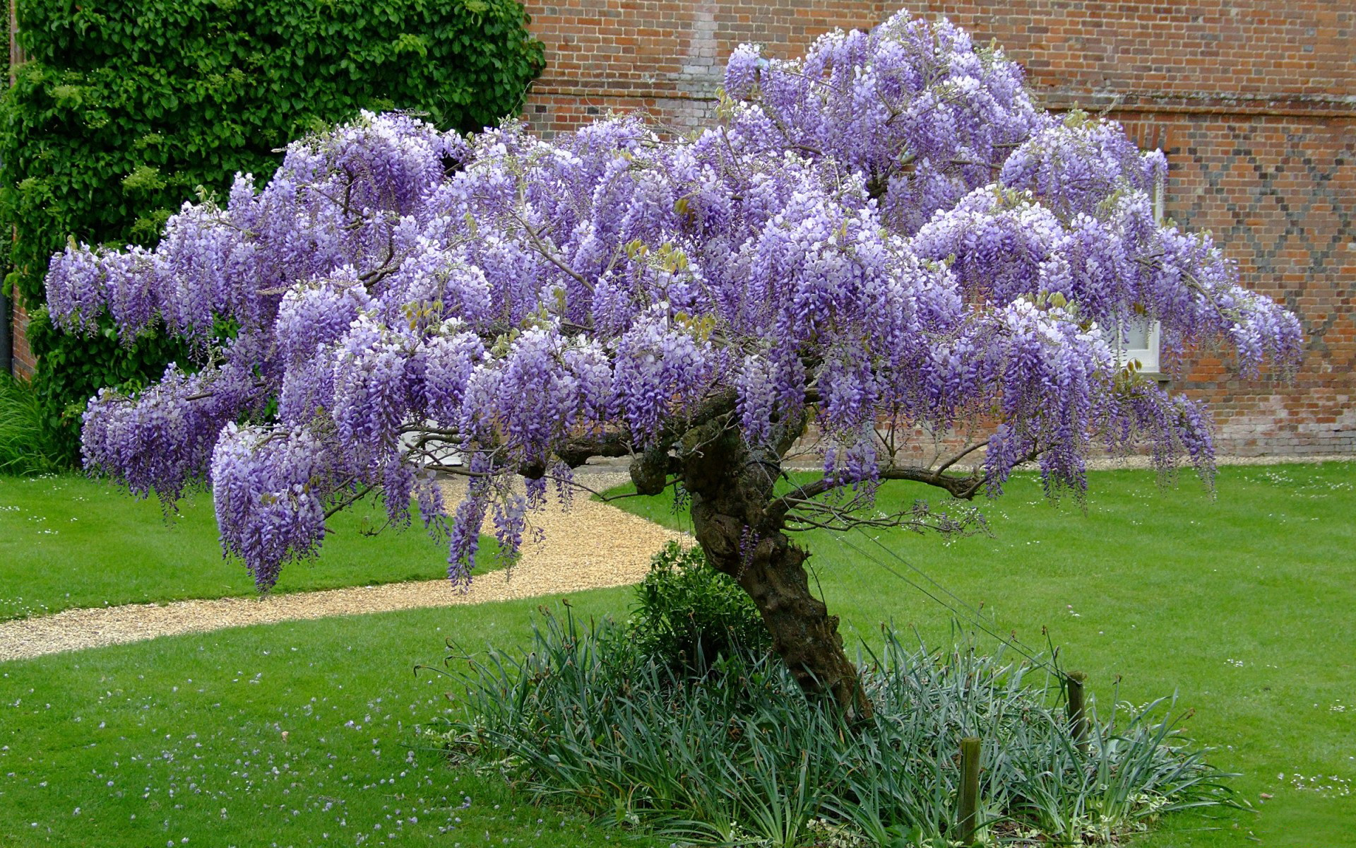 как цветущие деревья для сада фото и названия объявление инстаграме