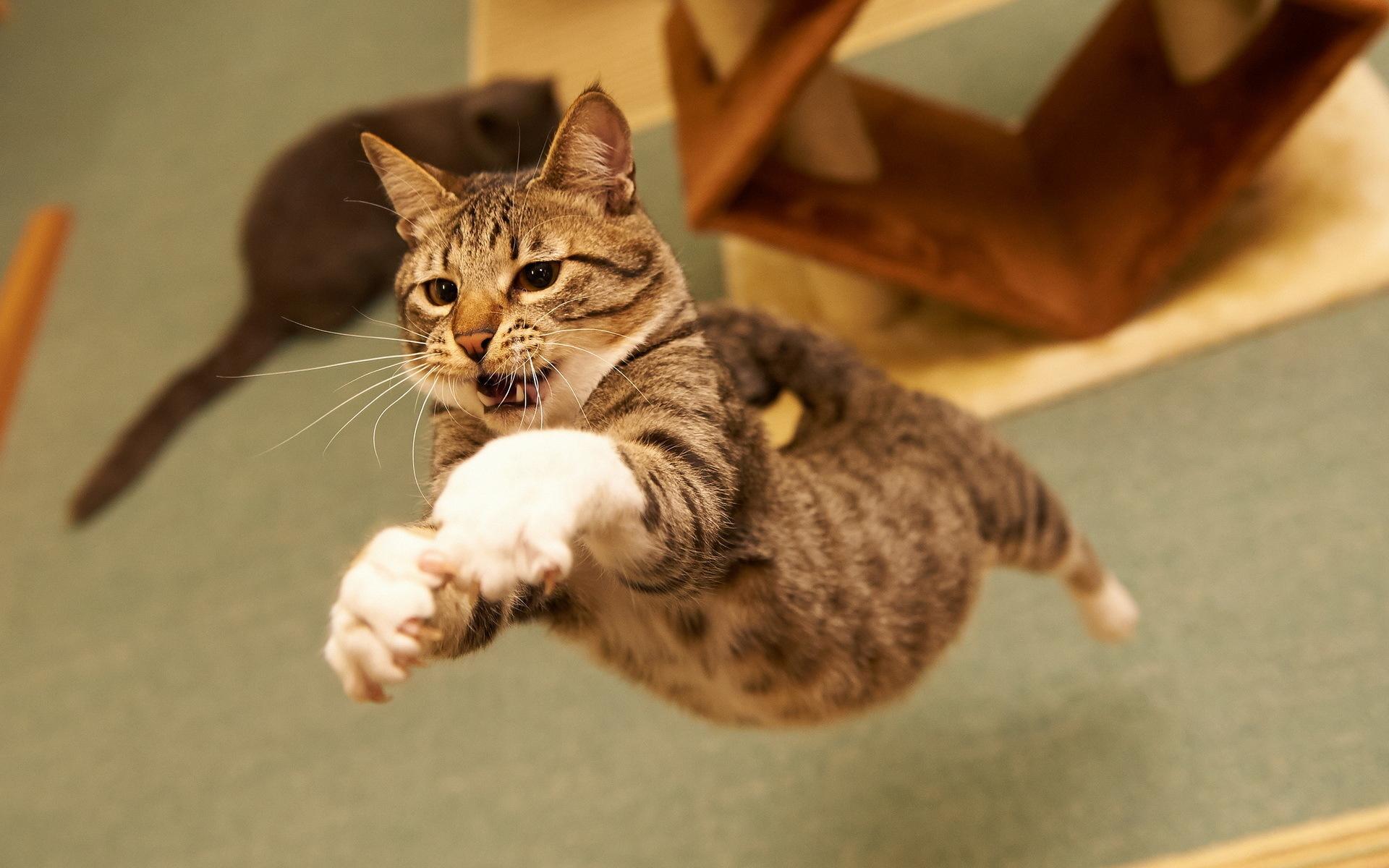 Мишки как, смешные рисунки кошек фото