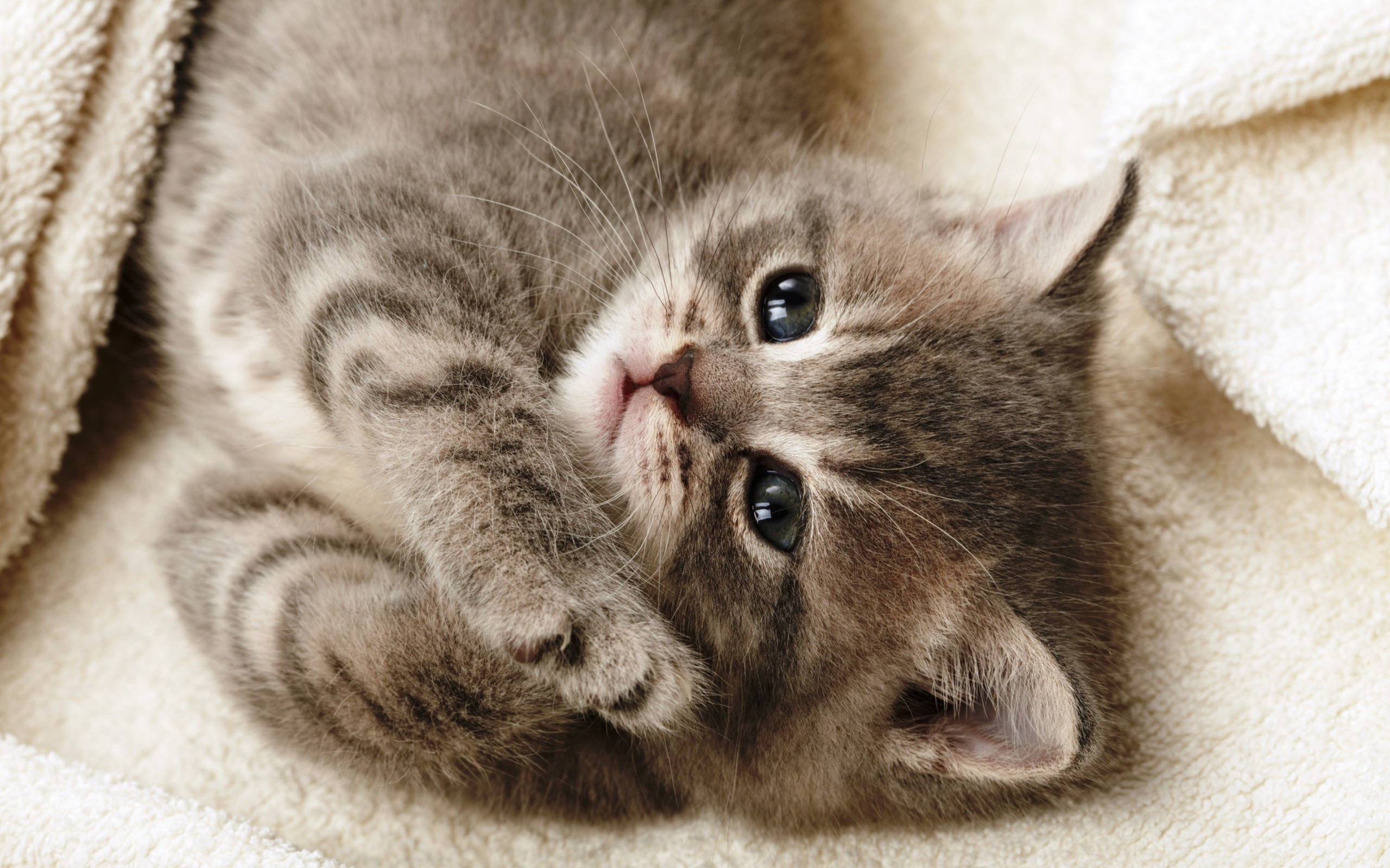 Картинки милых прикольных кошек