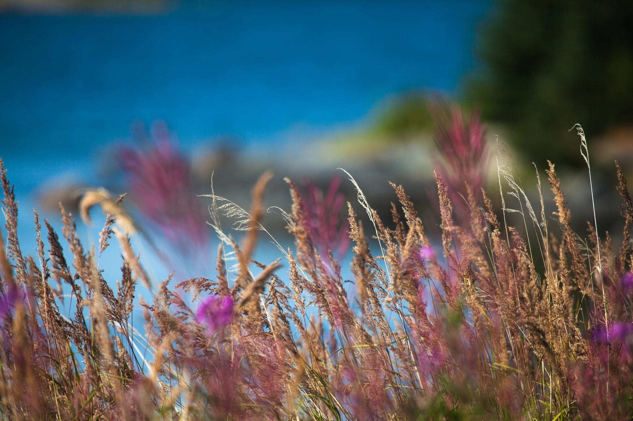 природа макро трава  № 2758836 без смс