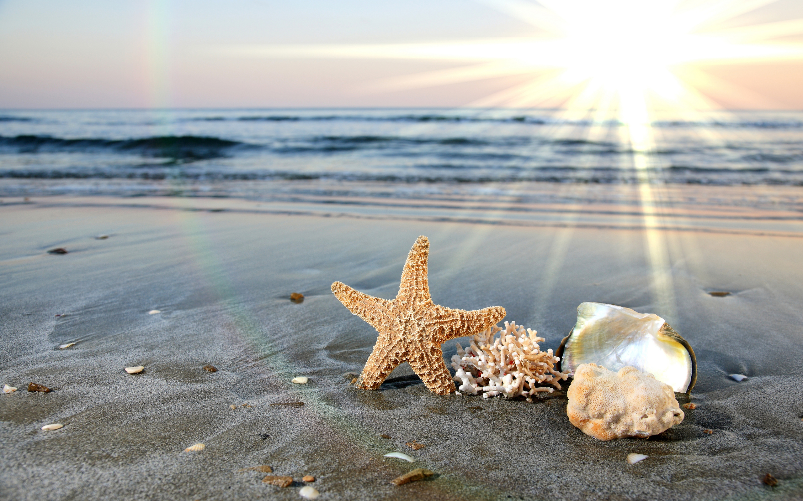 Ракушка на берегу море скачать