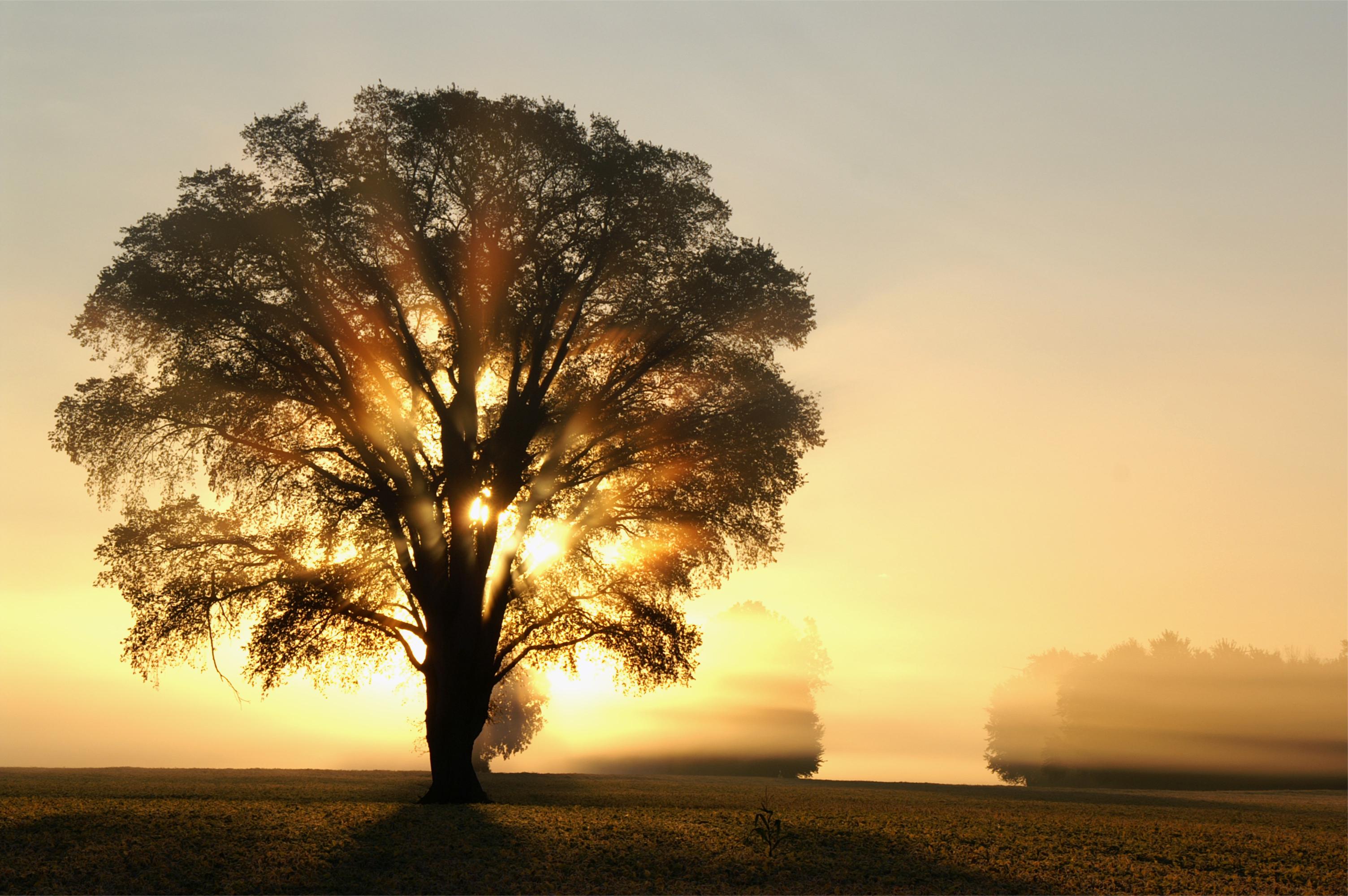природа рассвет деревья  № 1158263 без смс