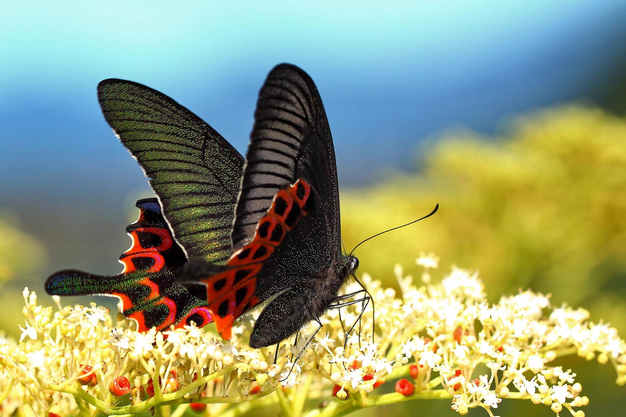 Разные бабочки  № 2033746 загрузить
