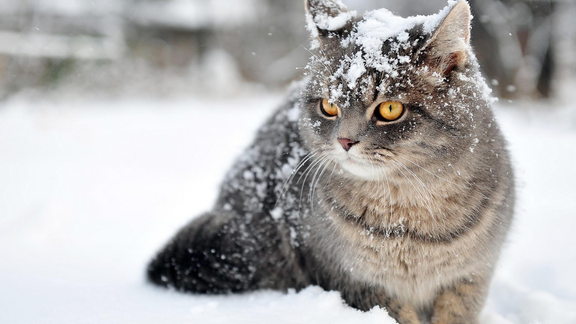 рыжий кот снег взгляд подборки
