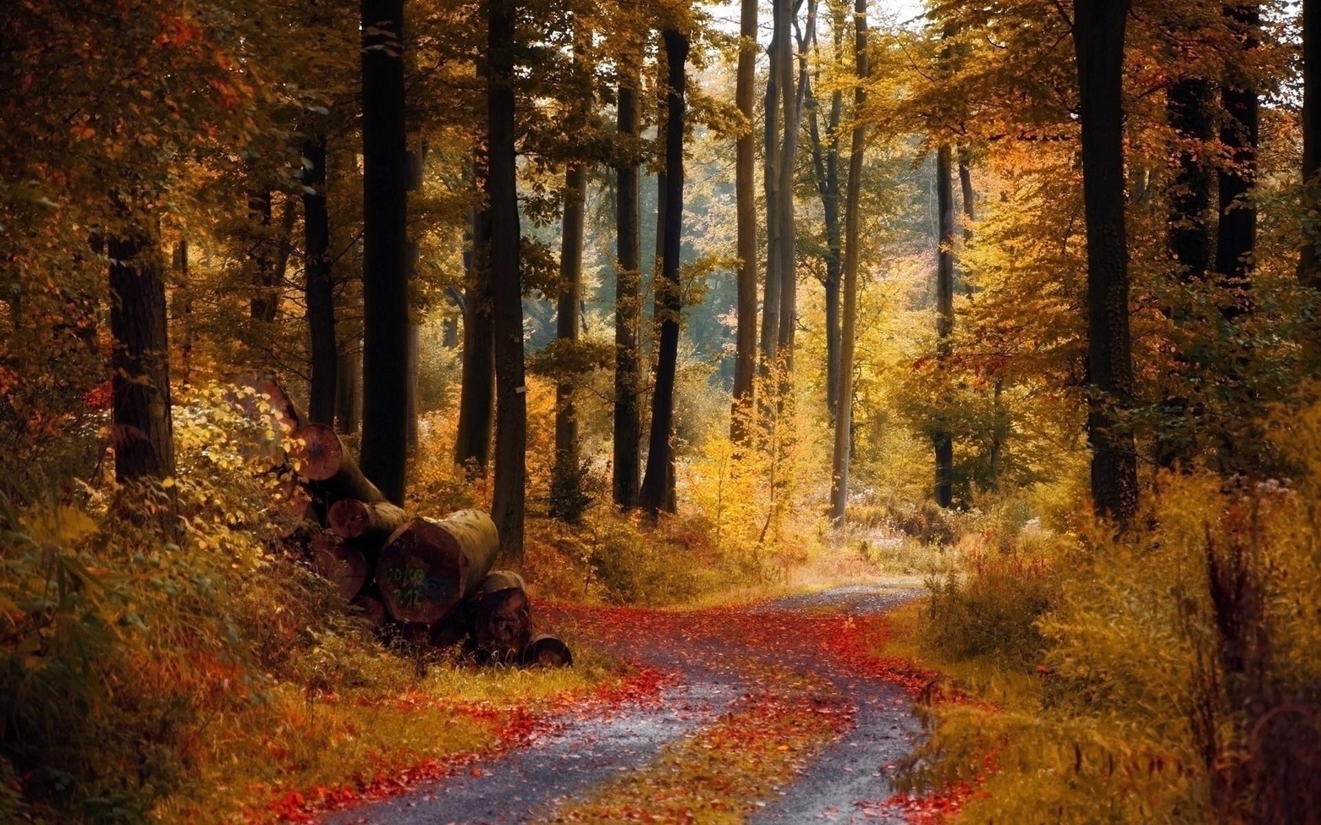 Осення дорожка лесу без смс