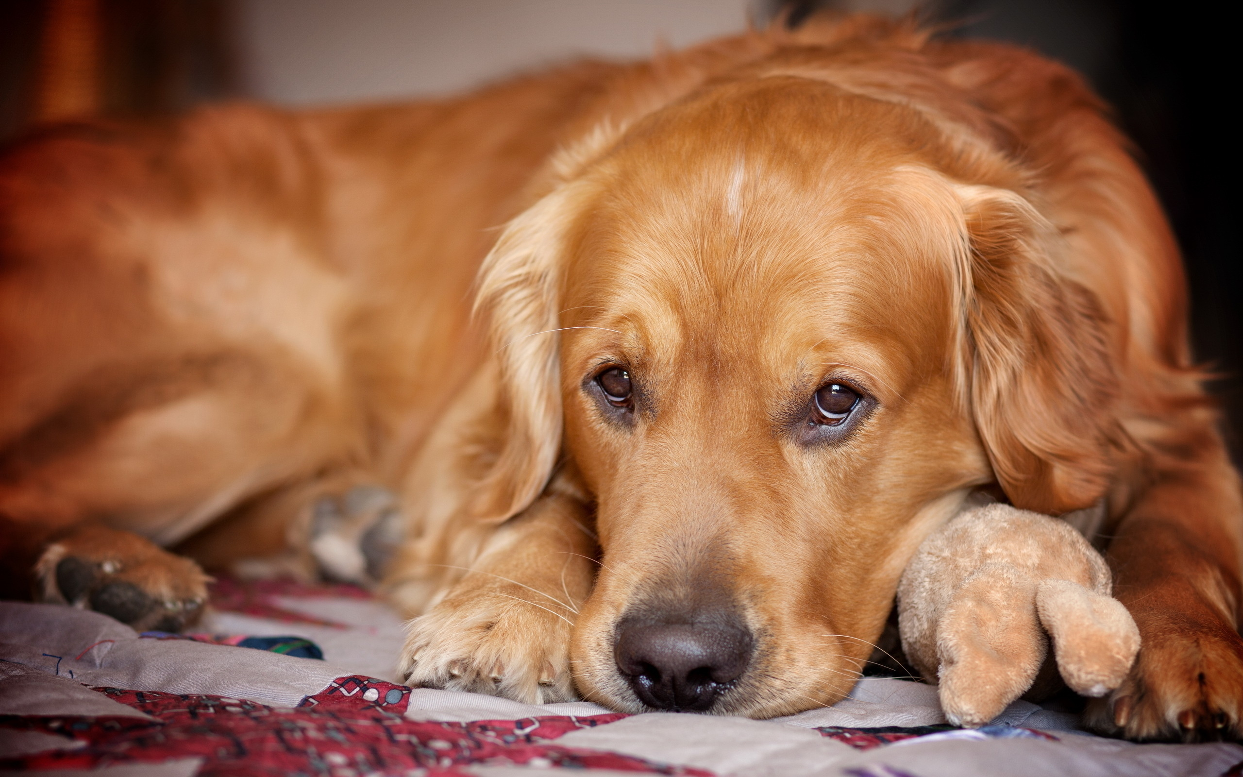 пёс язык собака на бревне  № 2524106  скачать