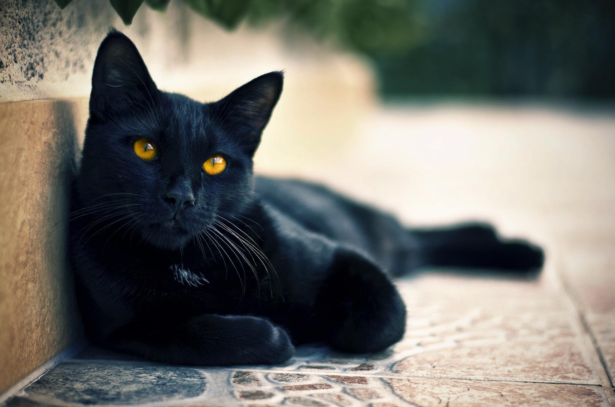 Юмором, открытки черные кошки
