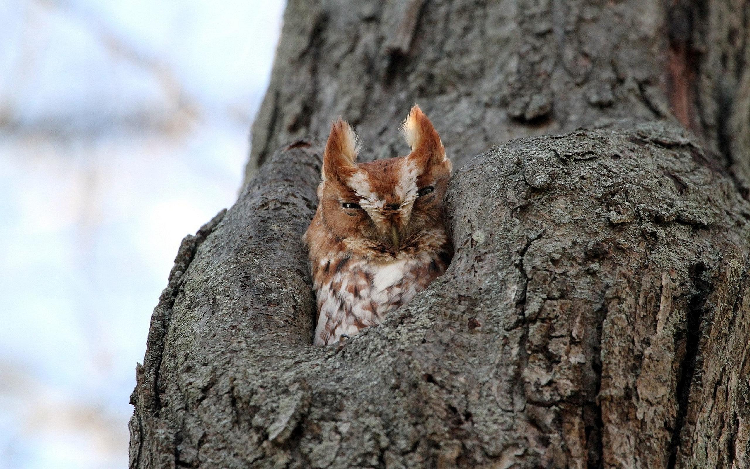 Сова на дереве загрузить