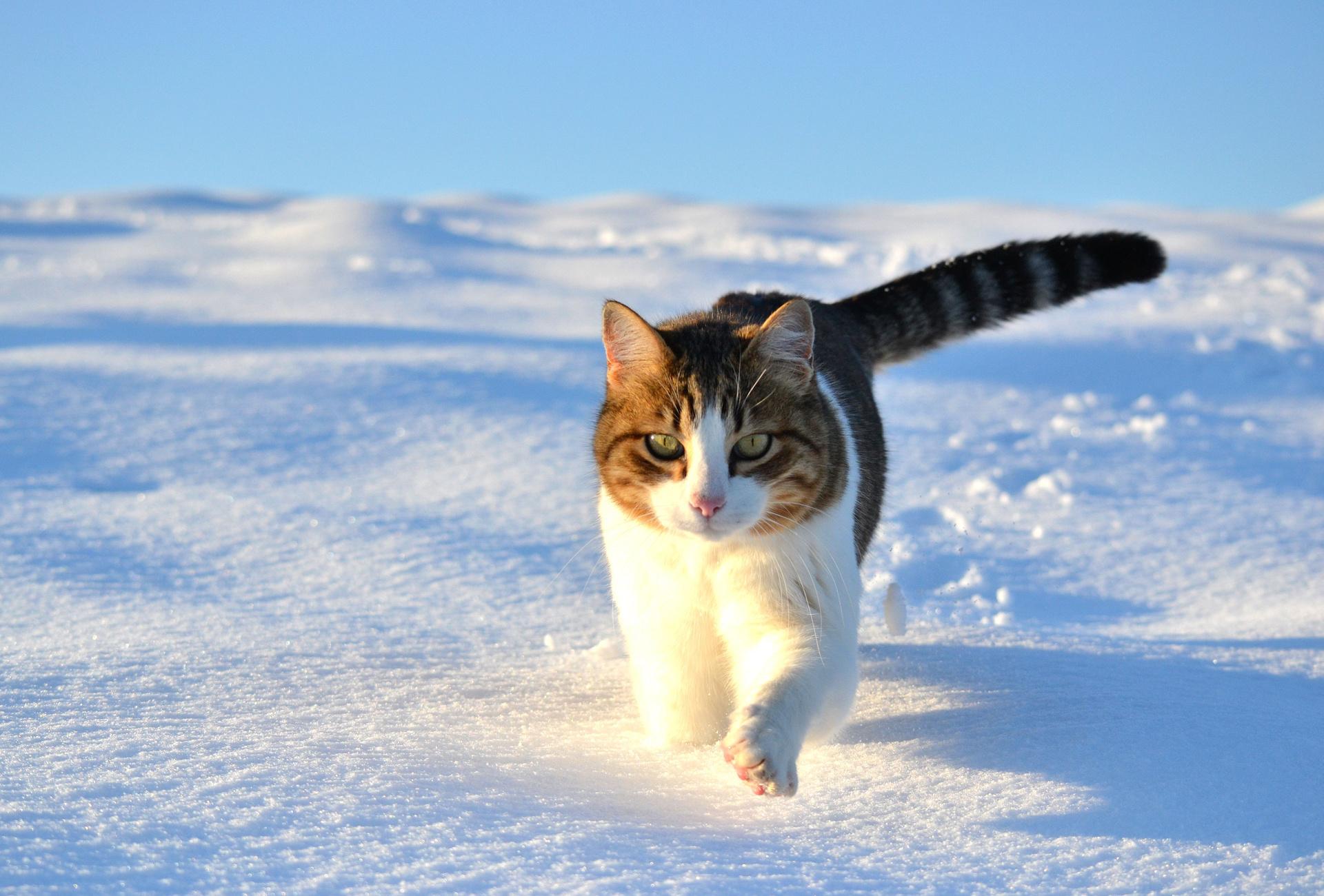 Кот на снегу загрузить