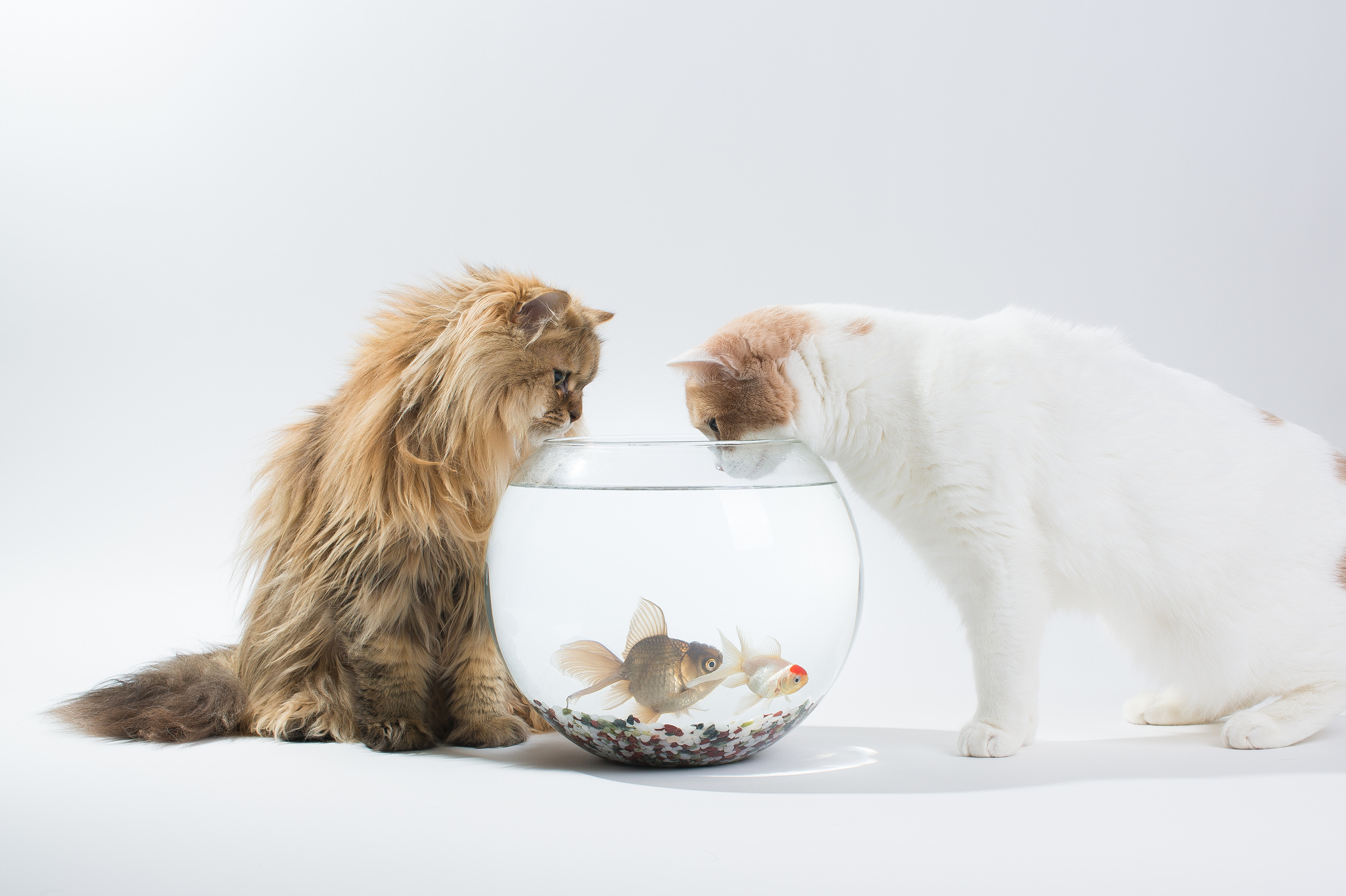 серый кот с рыбкой  № 692257 без смс