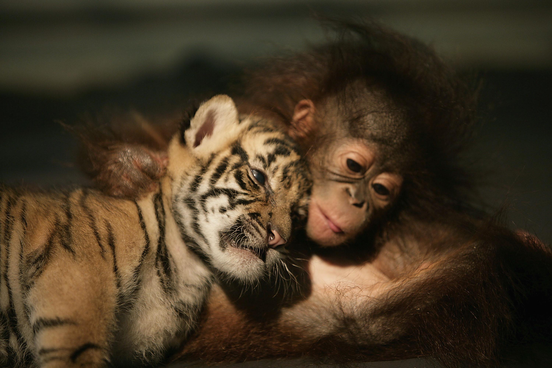 Днем, смешные картинки обезьяна и лев