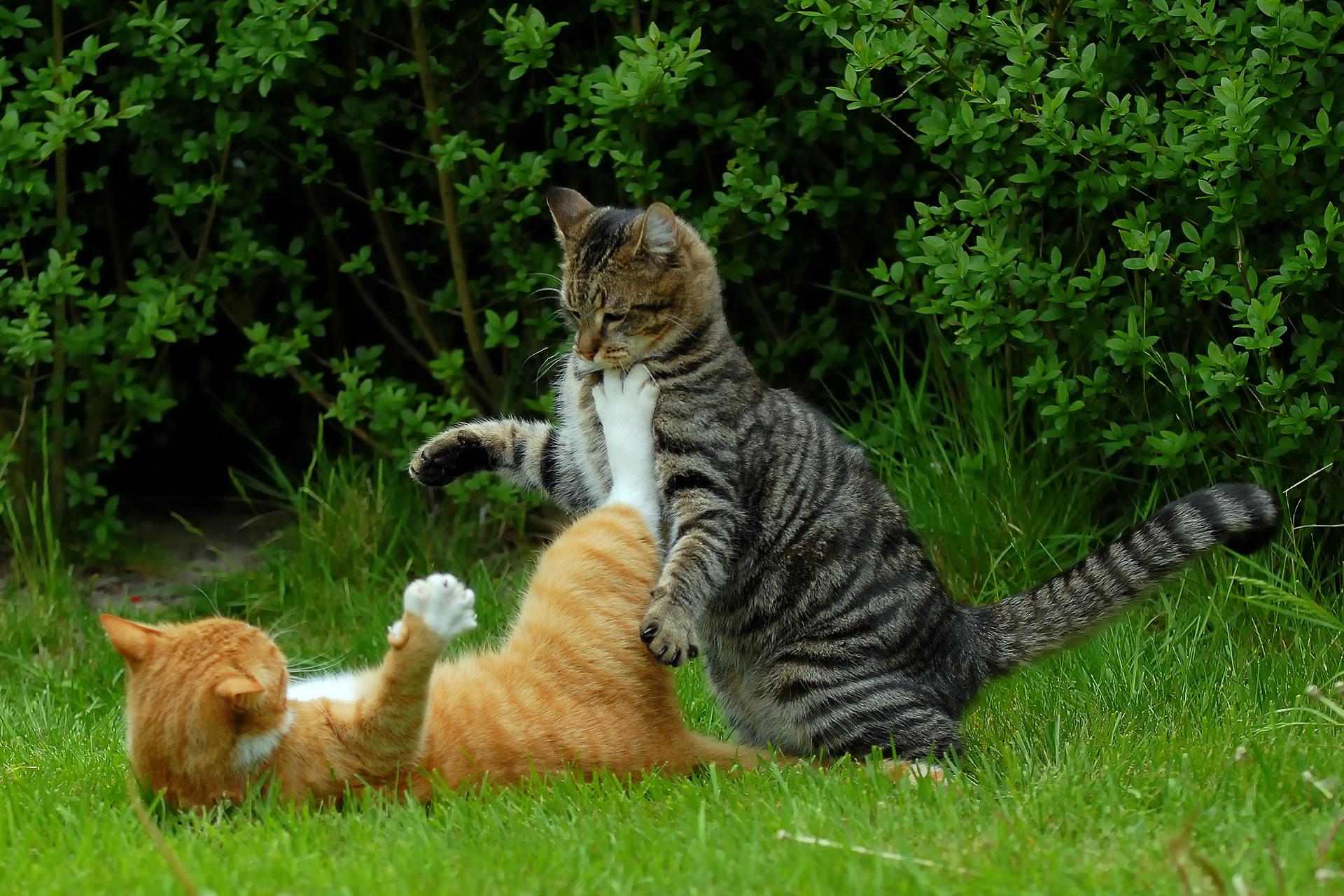 Котенок играющий с кошкой в траве  № 1994988 бесплатно
