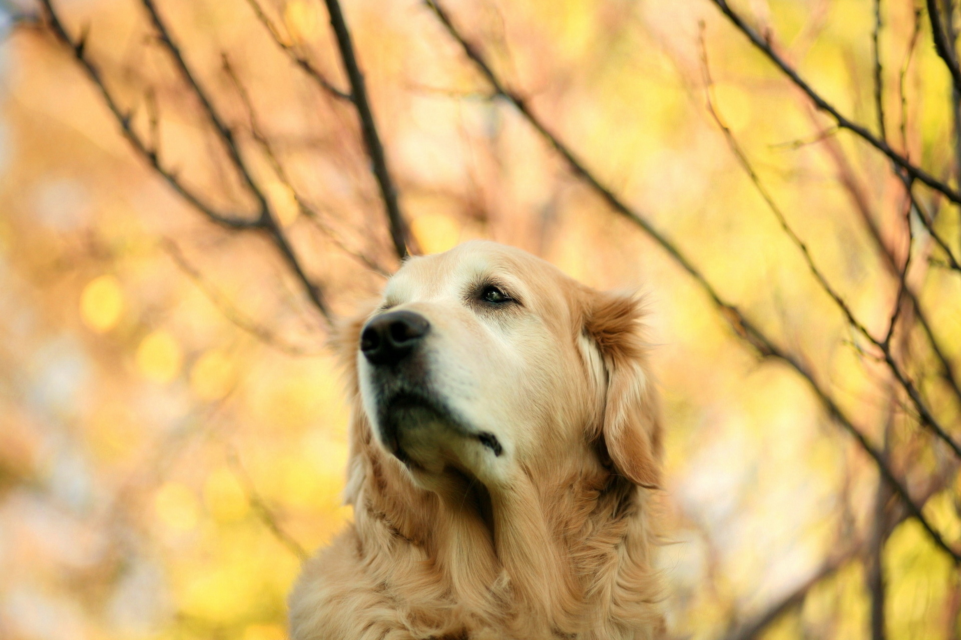 собака животное природа  № 690784 бесплатно