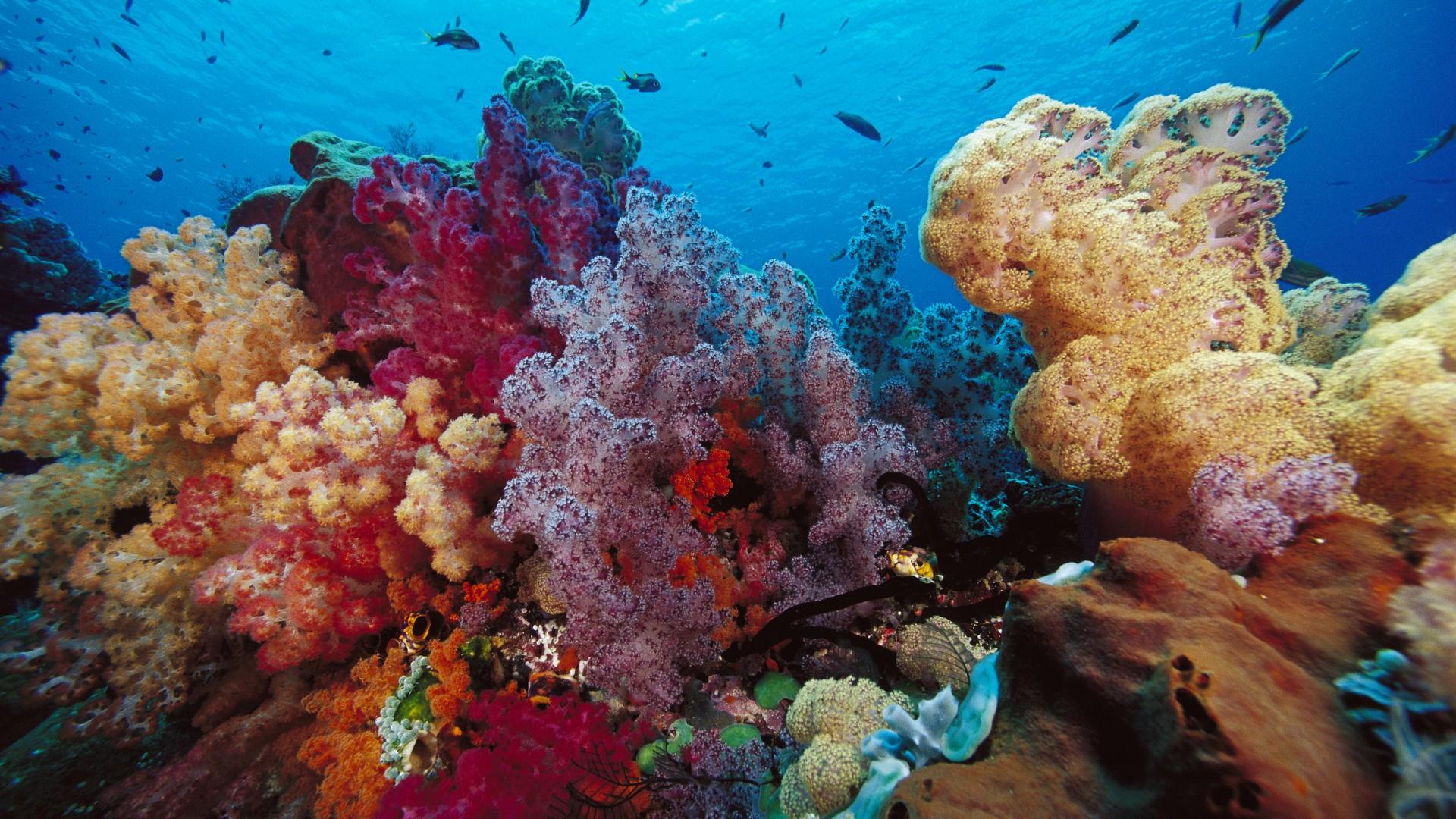 упакована подводный мир фото красивое картинки березы