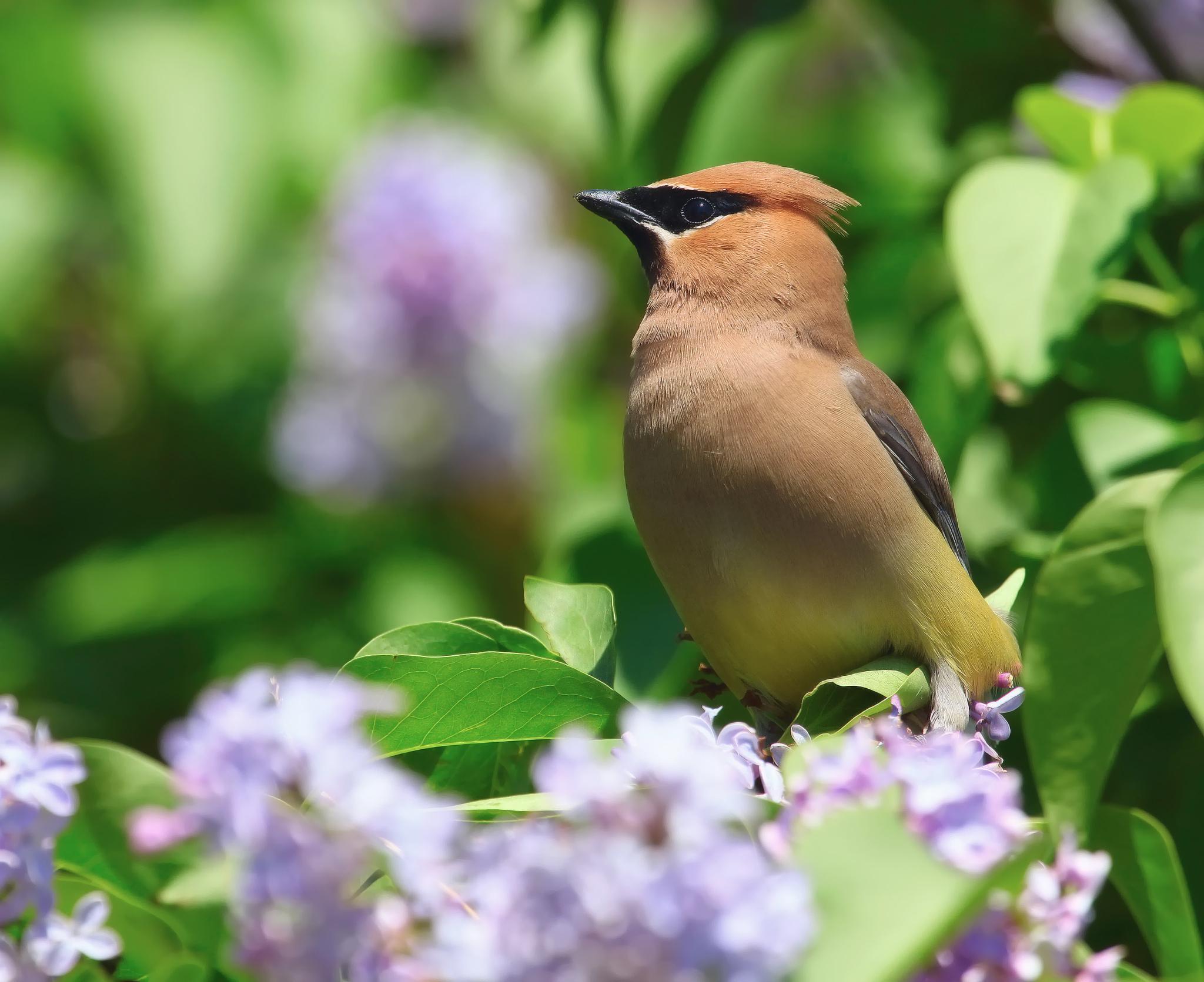 природа птицы животные весна  № 290703  скачать