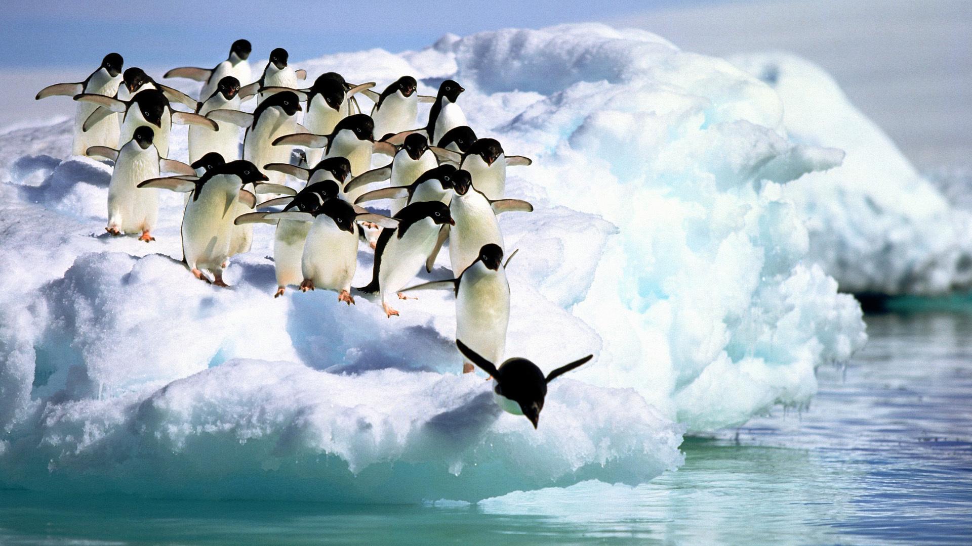 пингвины на глыбе льда  № 91184 без смс