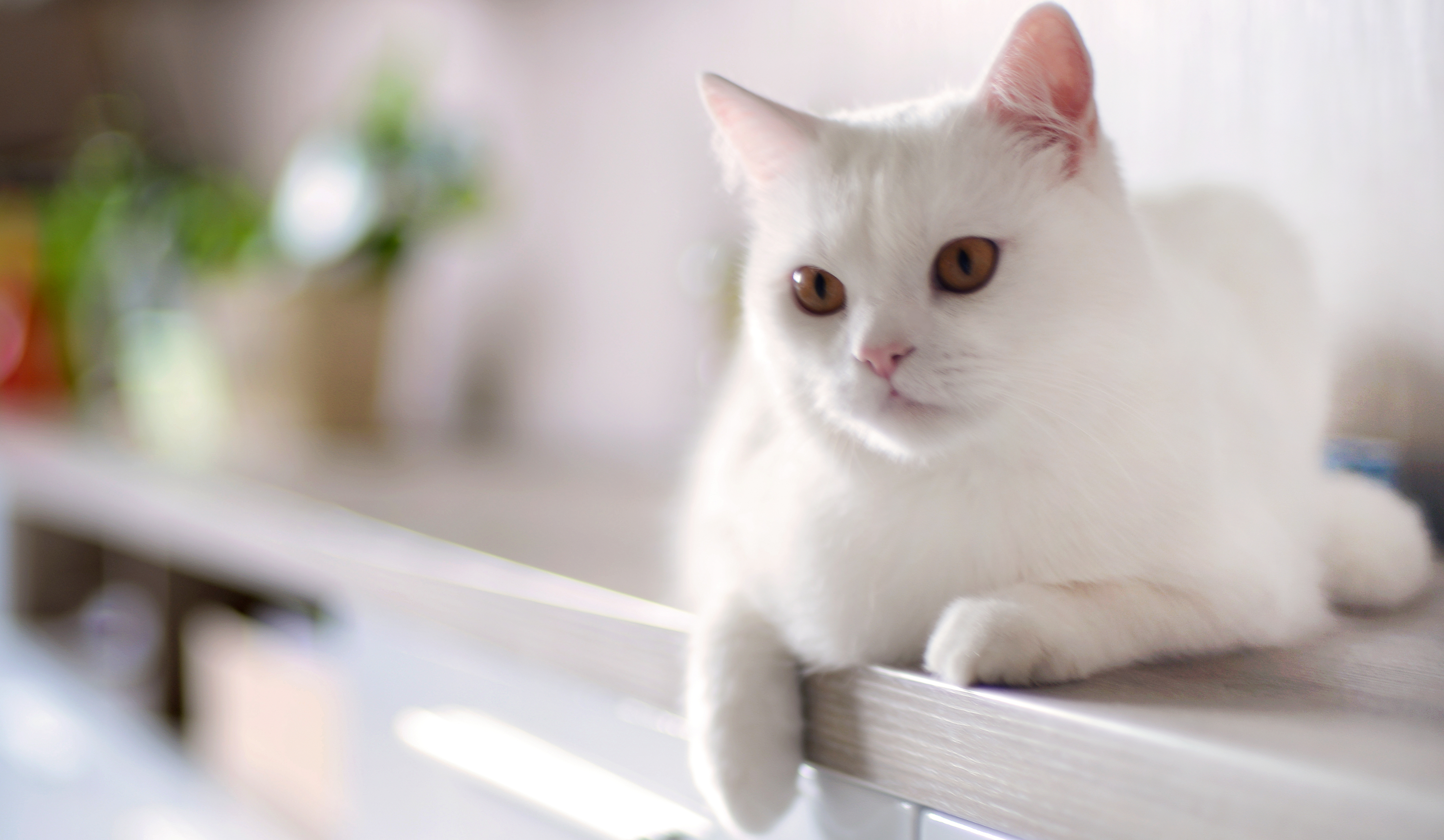 Unusual and Unique Names for White Cats  PetHelpful