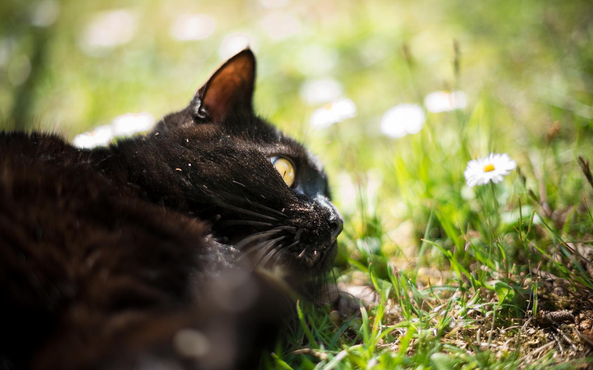 черный кот природа животные black cat nature animals загрузить