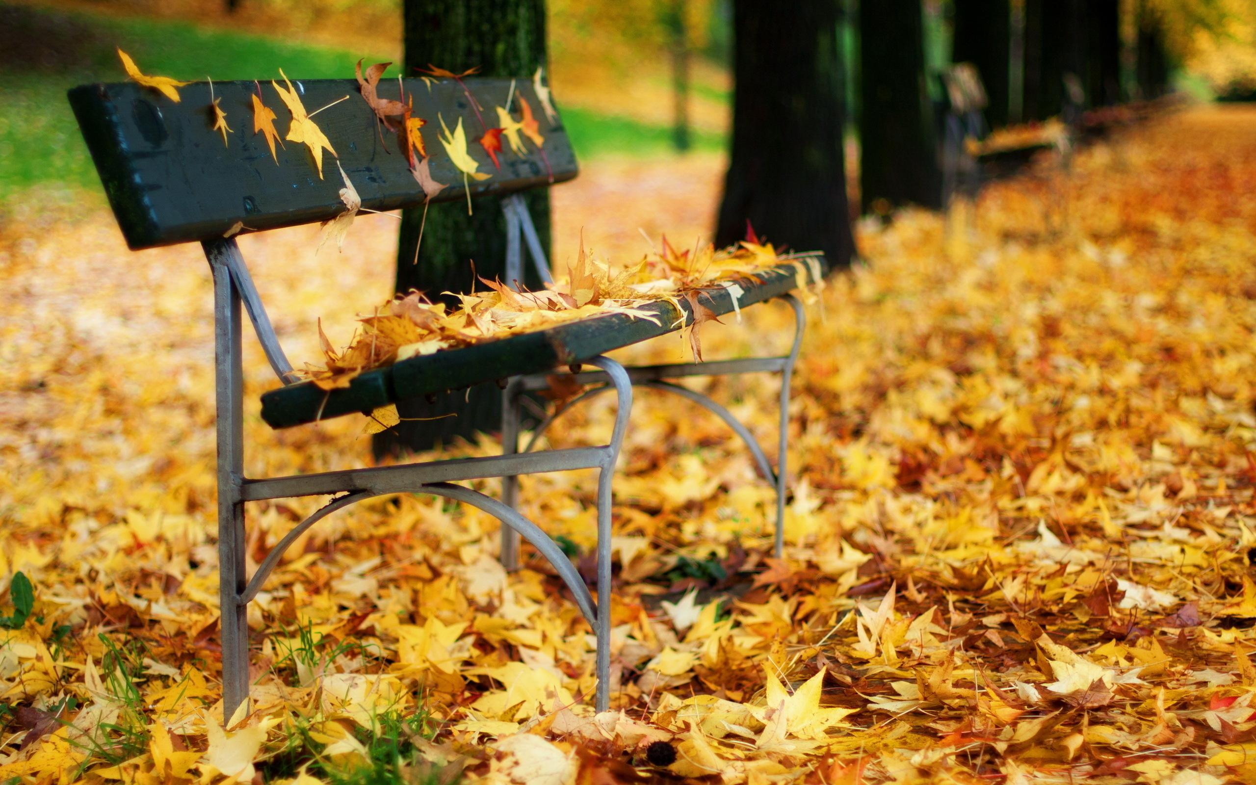 осень листья лавочка парк скачать