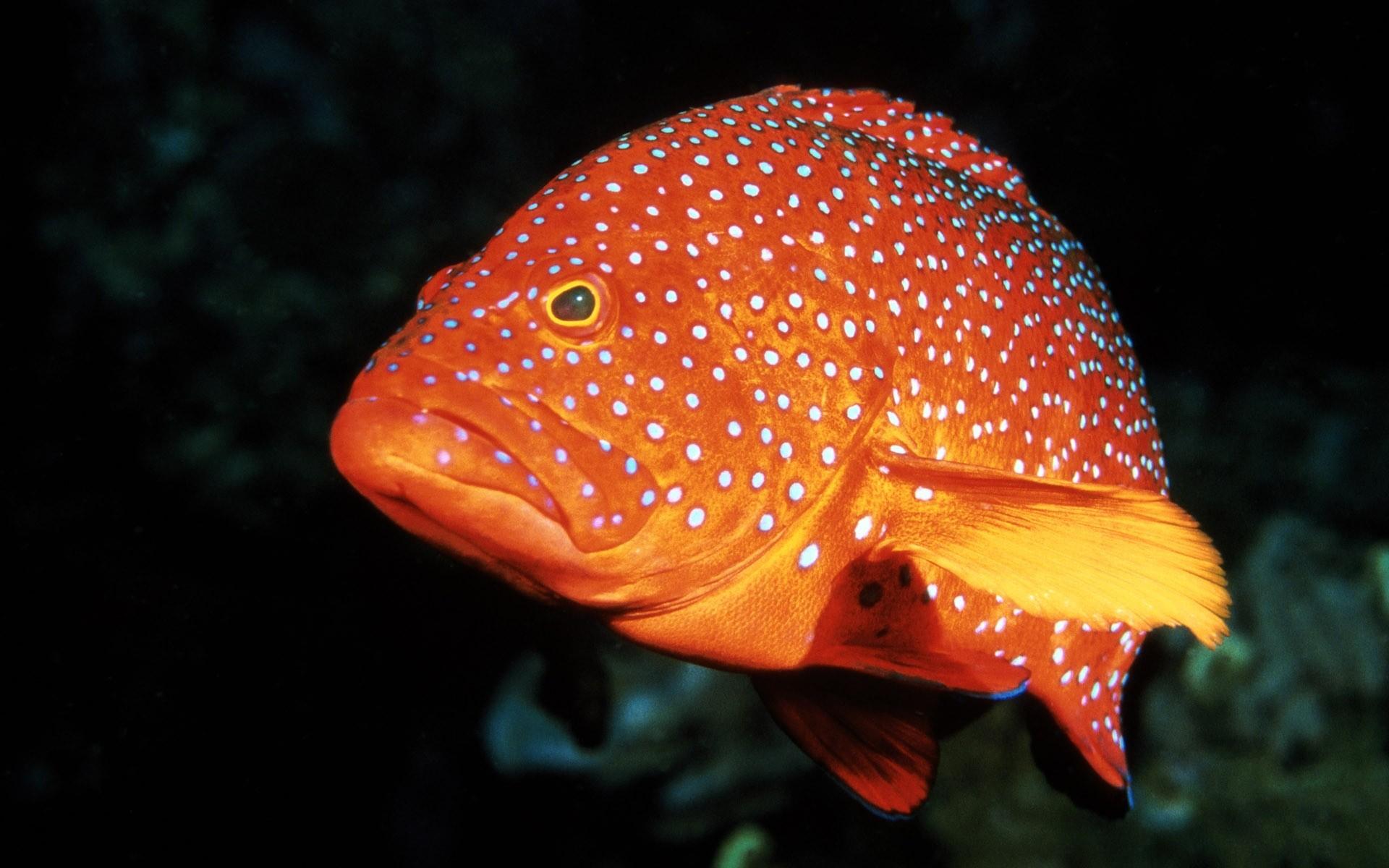 Рыбы фото красивые