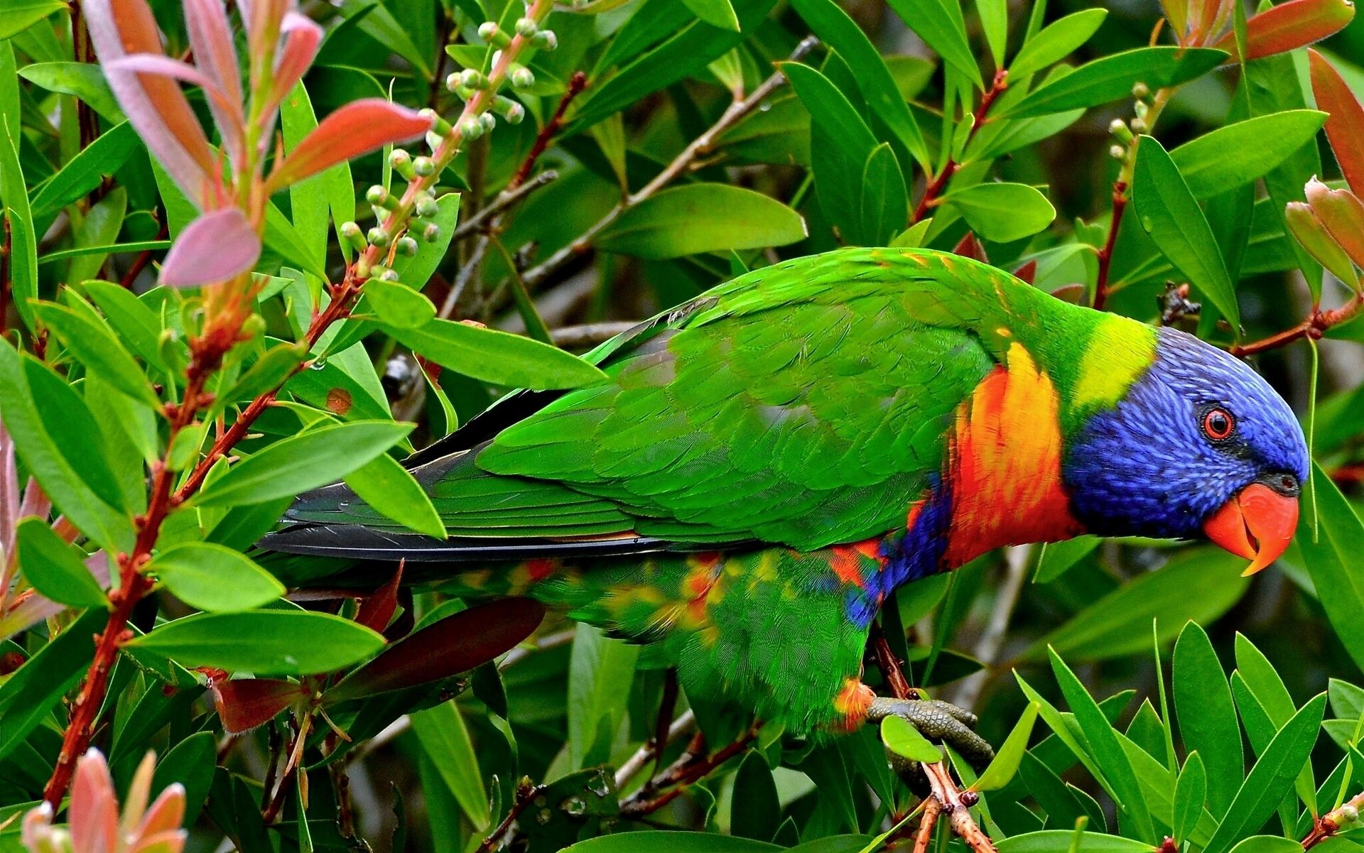 природа животные птицы попугаи  № 103566 загрузить