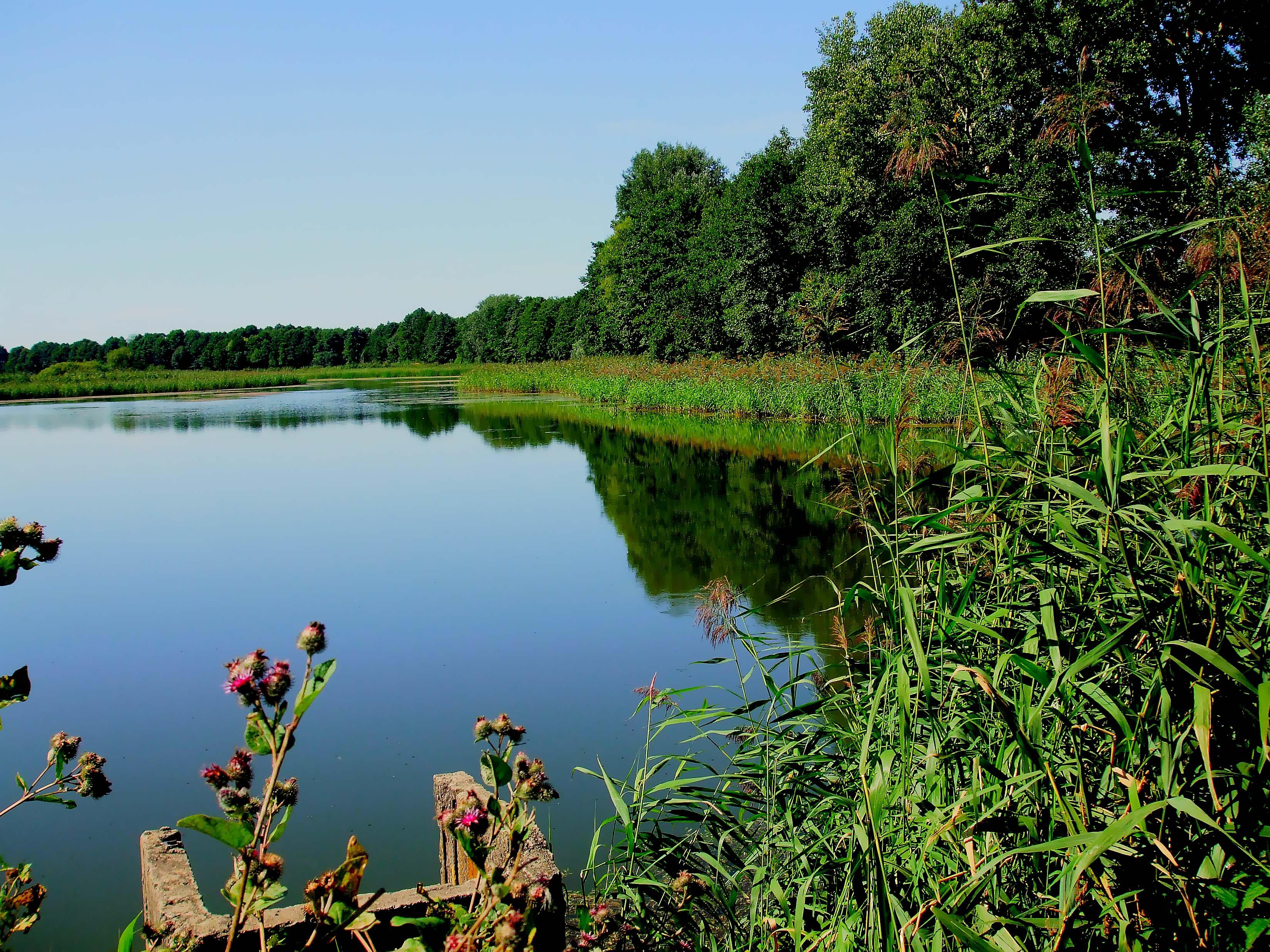 Лето озеро картинки на рабочий стол